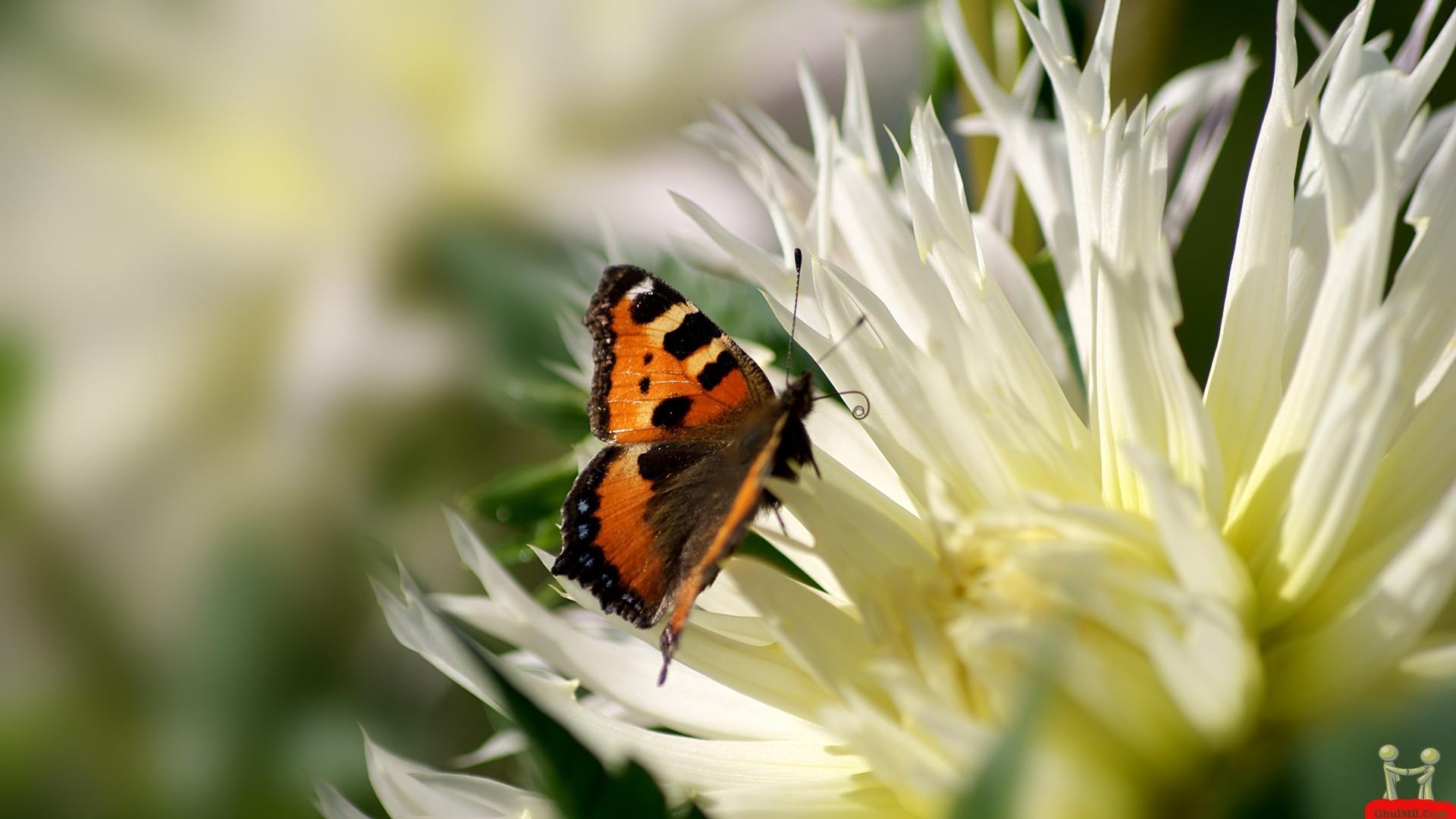 Beautiful Butterflies and Flowers Wallpapers – WallpaperSafari
