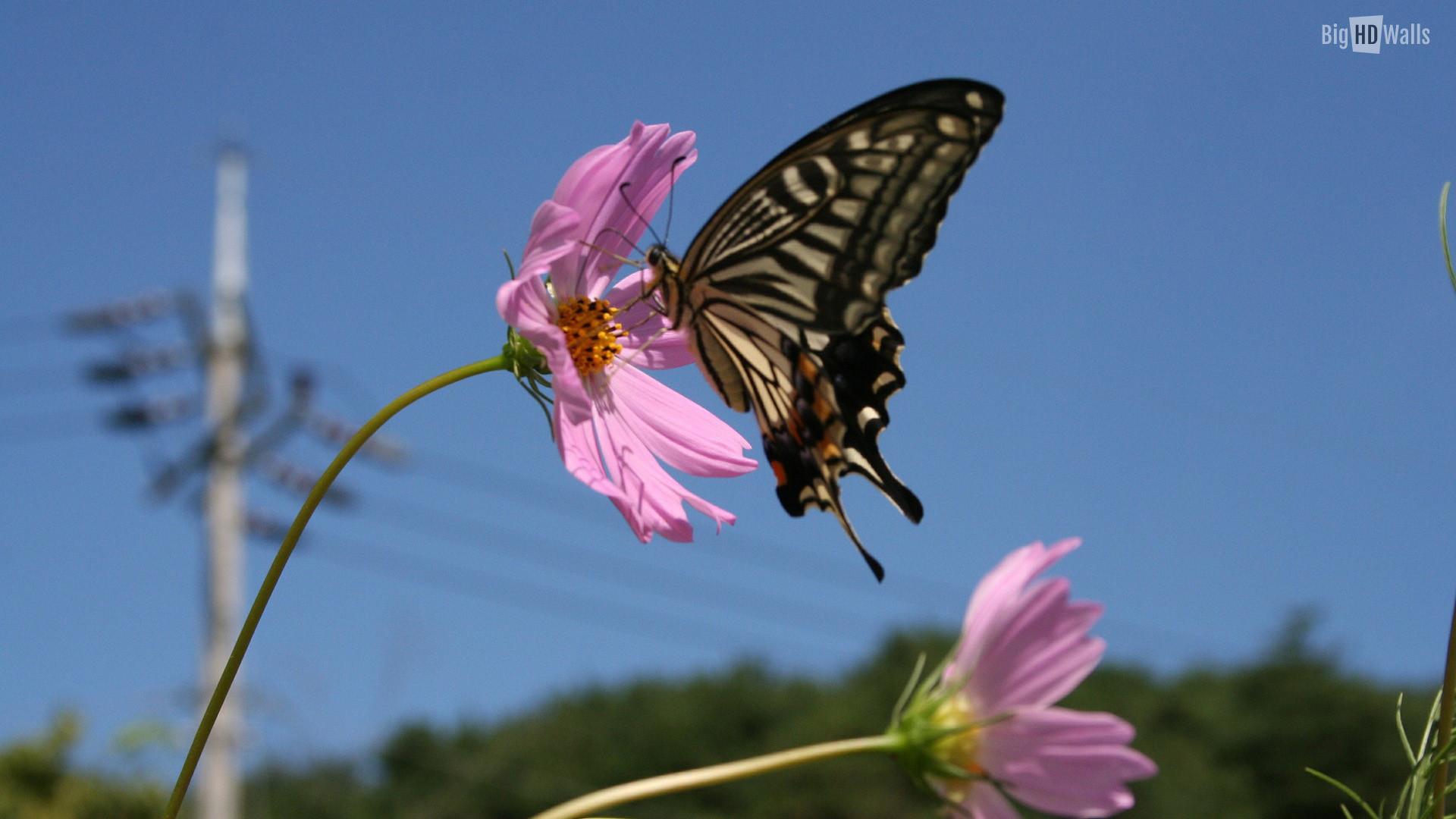 Butterfly-flower-wallpaper. Beautiful …
