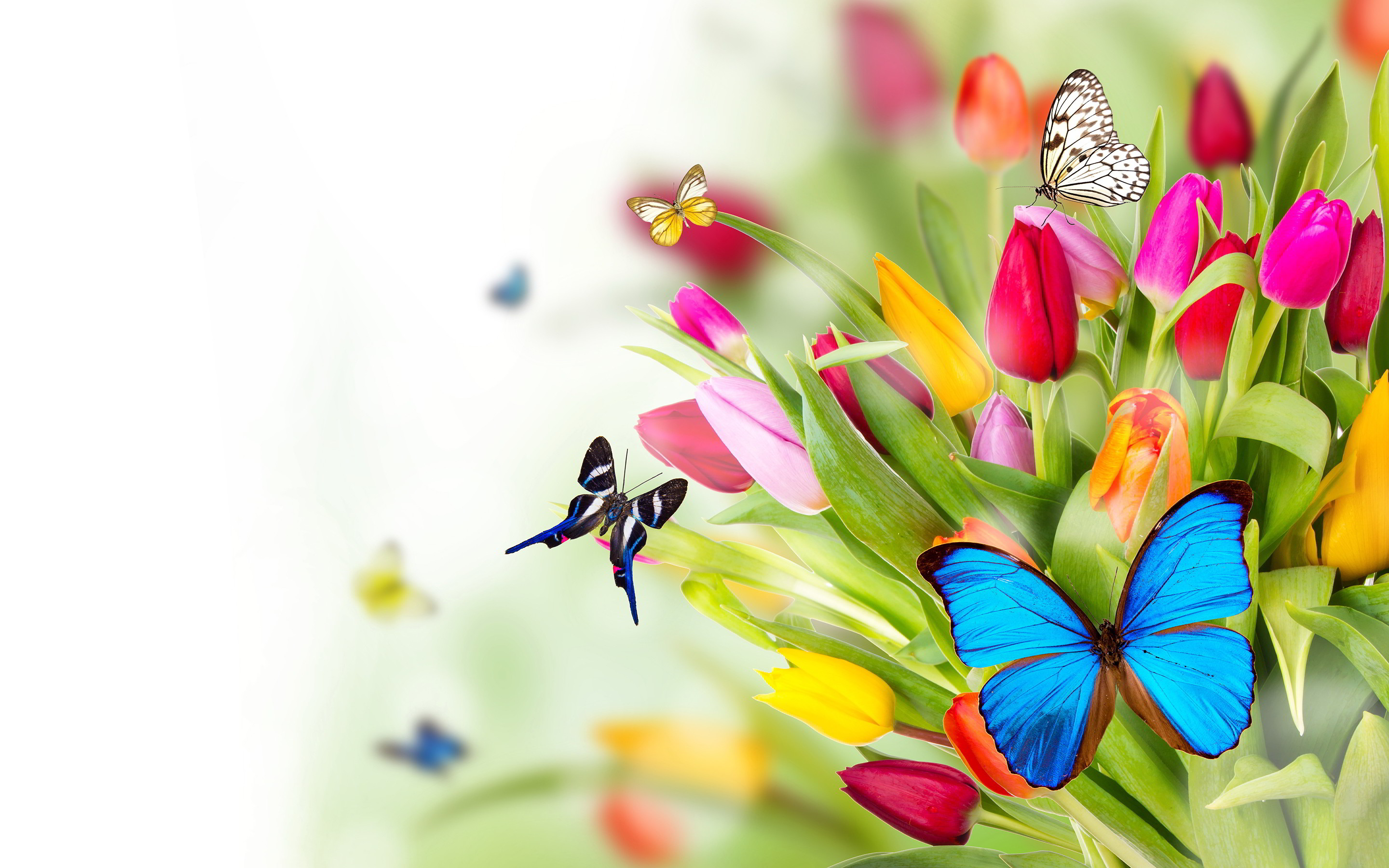 Top Beautiful Butterfly Pictures | Digiatto.com | HD Wallpaper and Download  Free Wallpaper