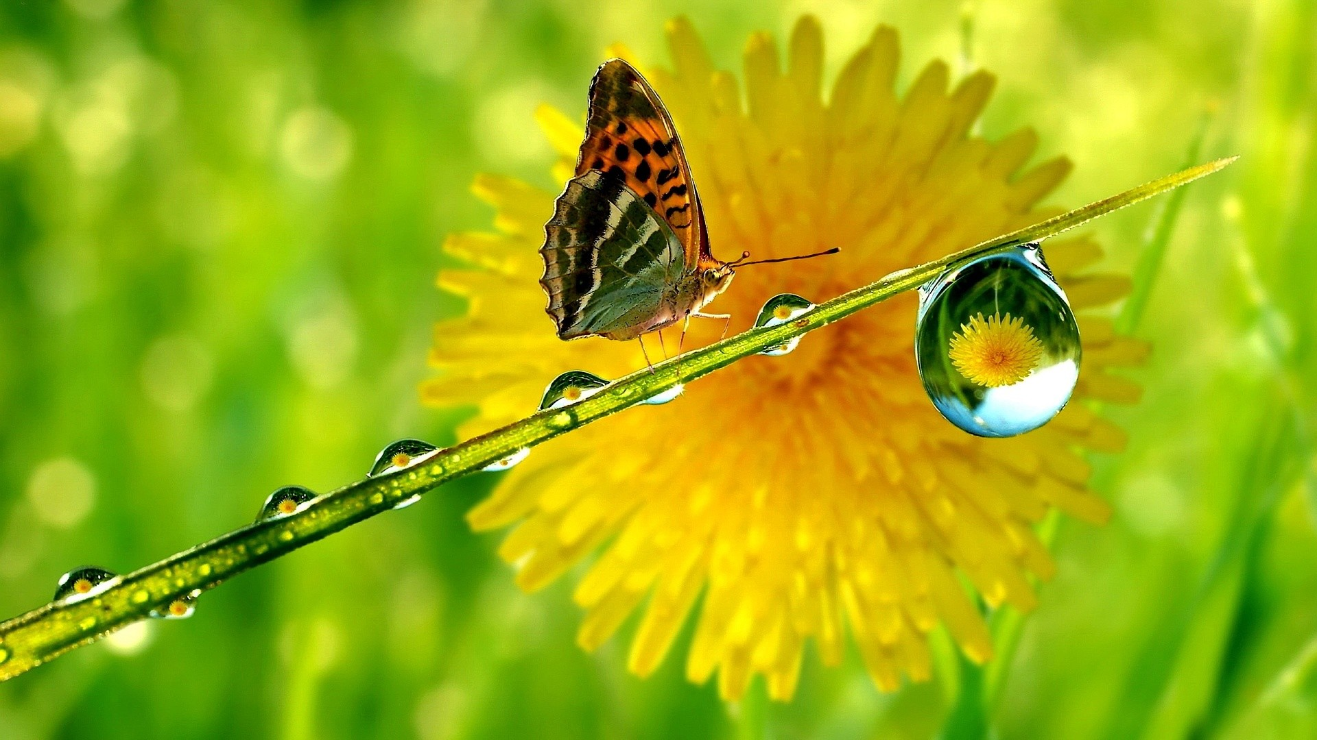 Peacock Butterfly Flower wallpapers (57 Wallpapers)