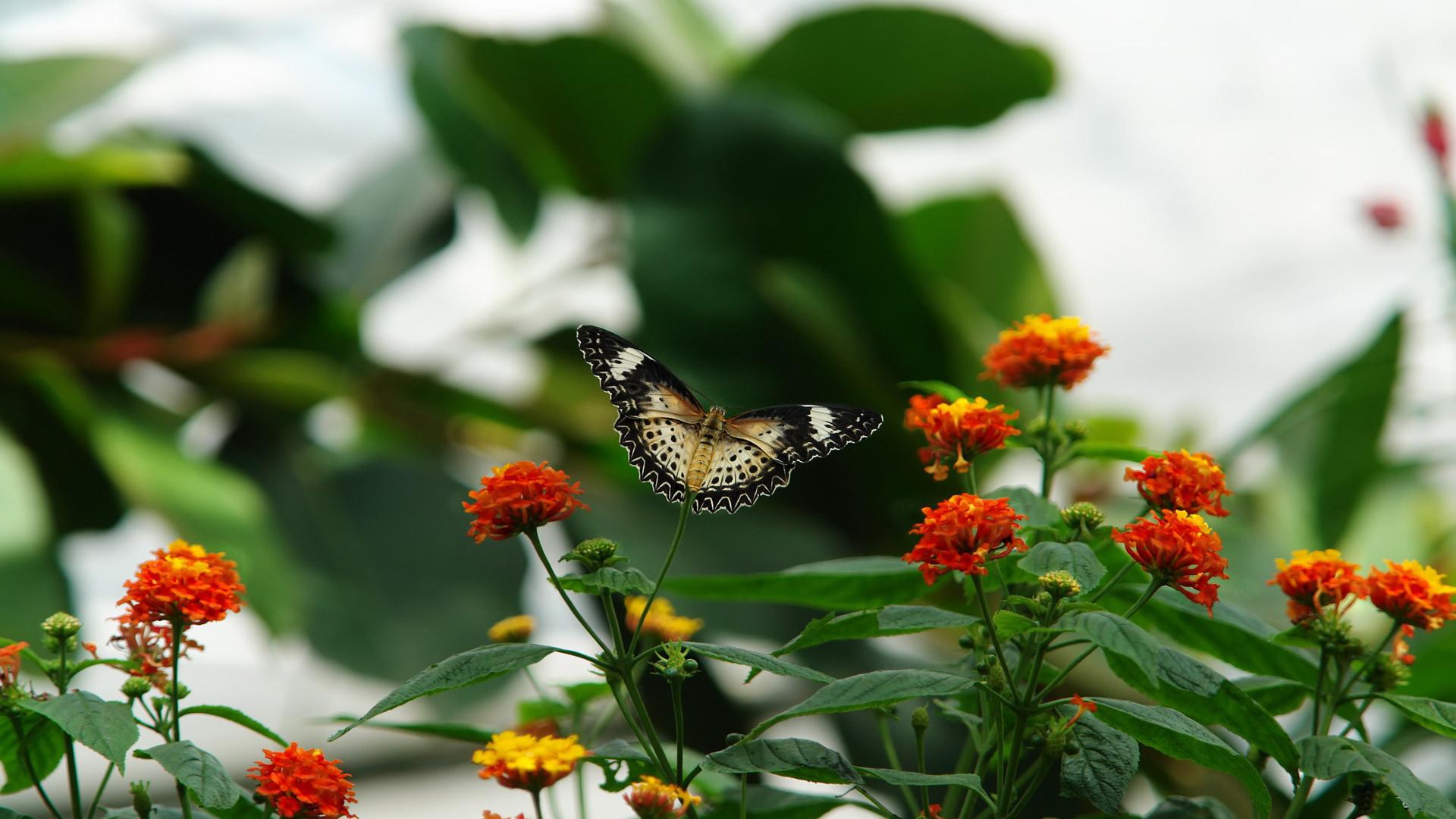 Butterfly Beautiful Hd Wallpaper Wallpapers Points