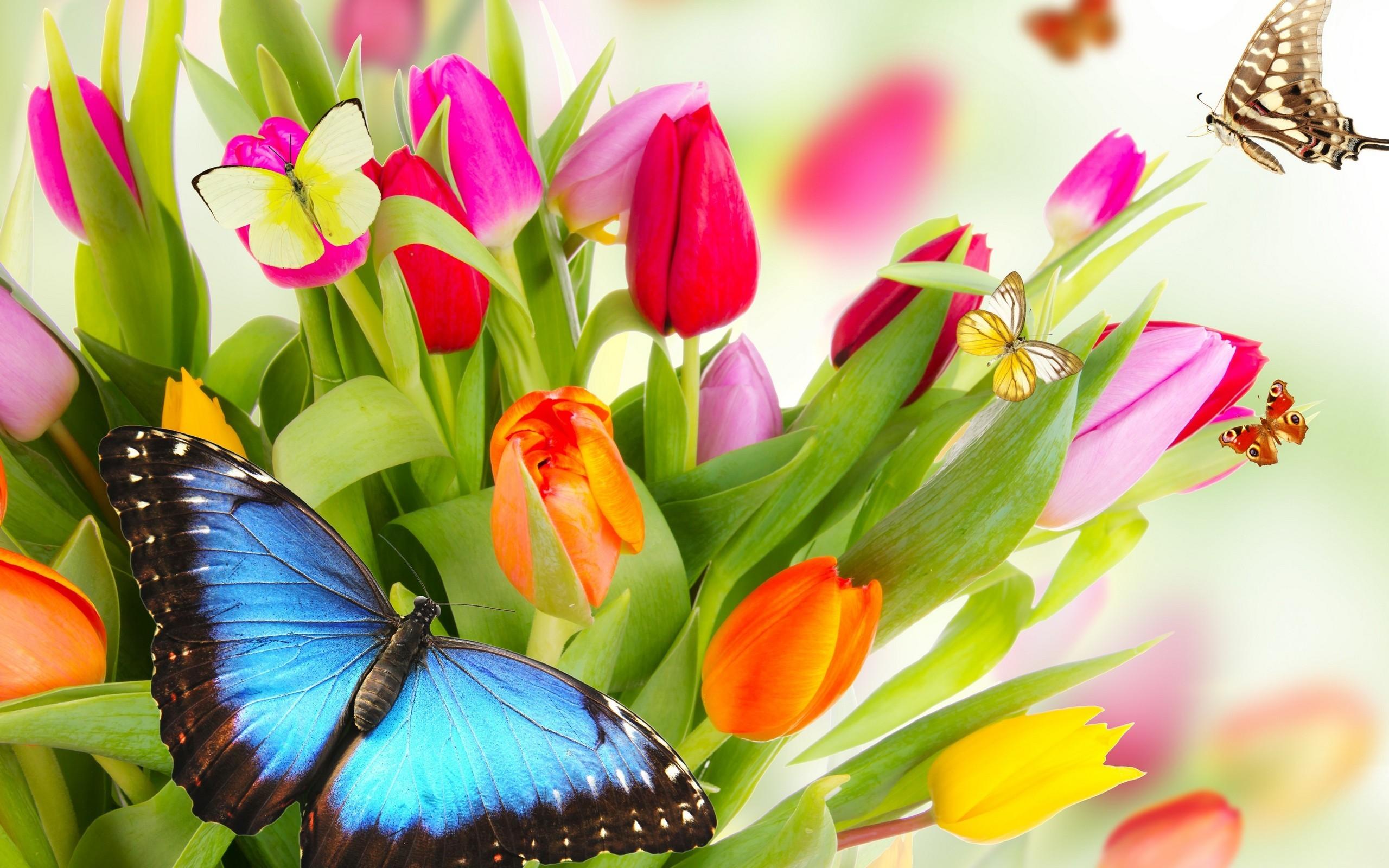 Flowers, beauty, butterflies wallpaper thumb