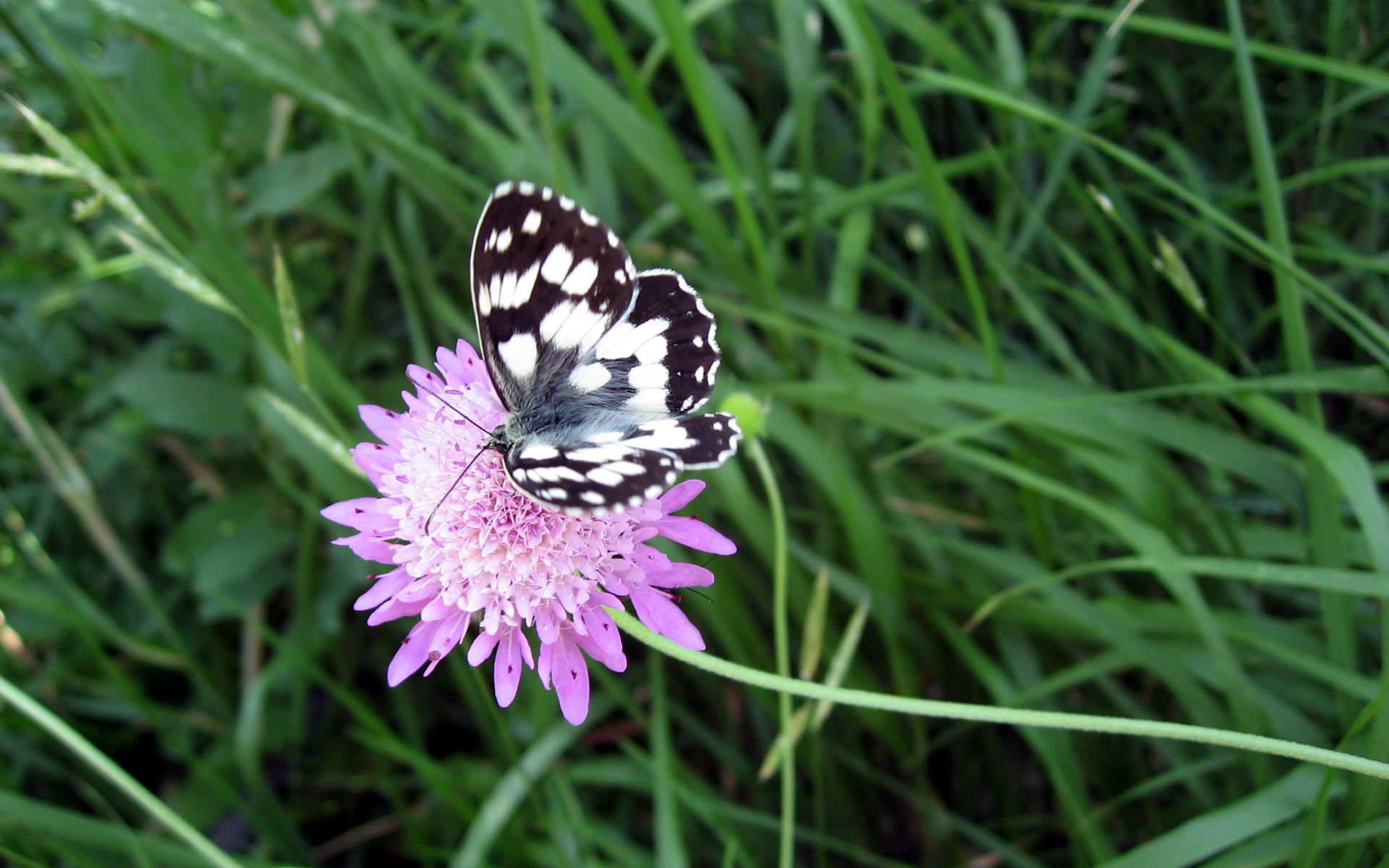new butterfly pictures | wallpaper, butterfly, flower, high, resolution,  world,