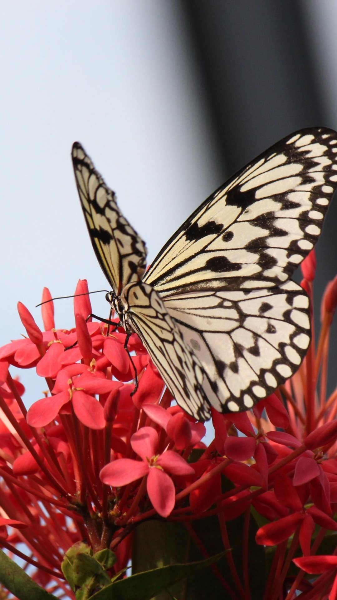 Beautiful Butterfly on Red Flower