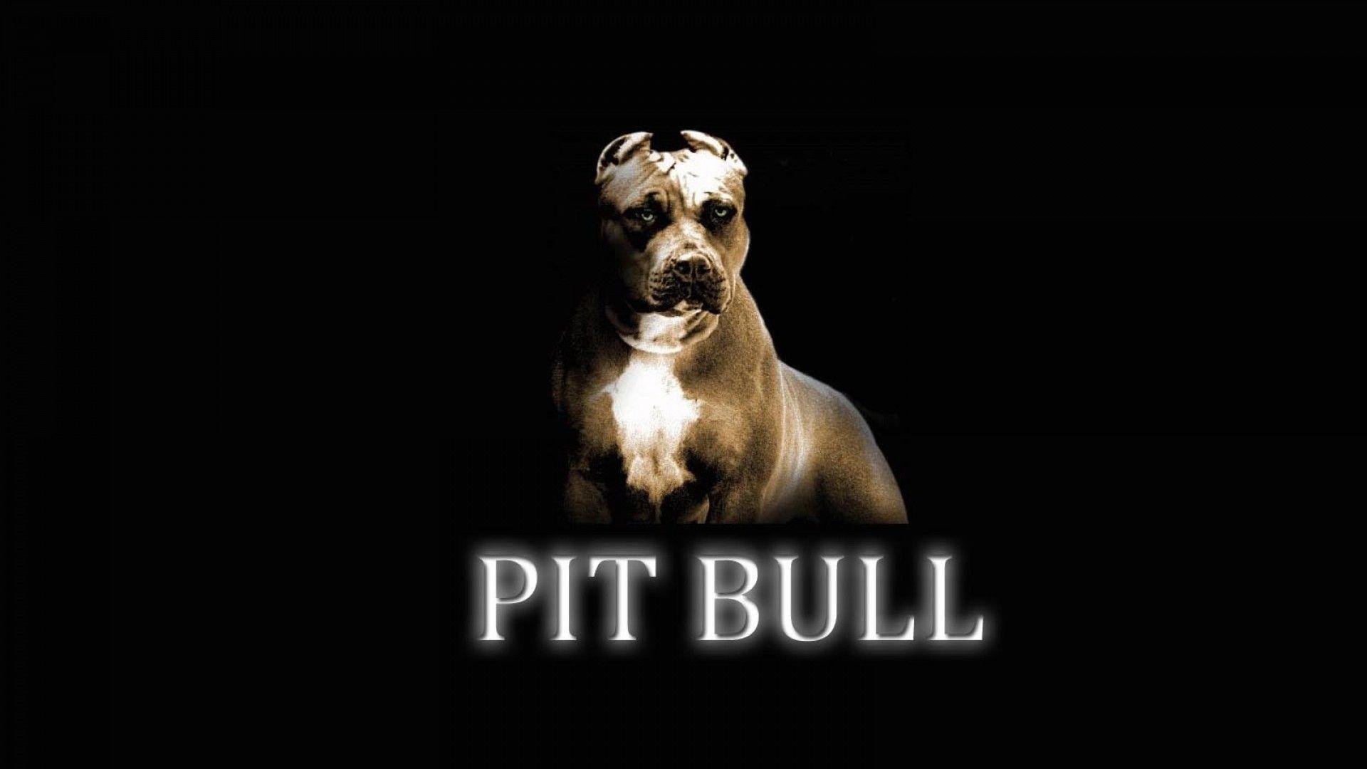 Pitbull Dog Wallpapers Wallpaper