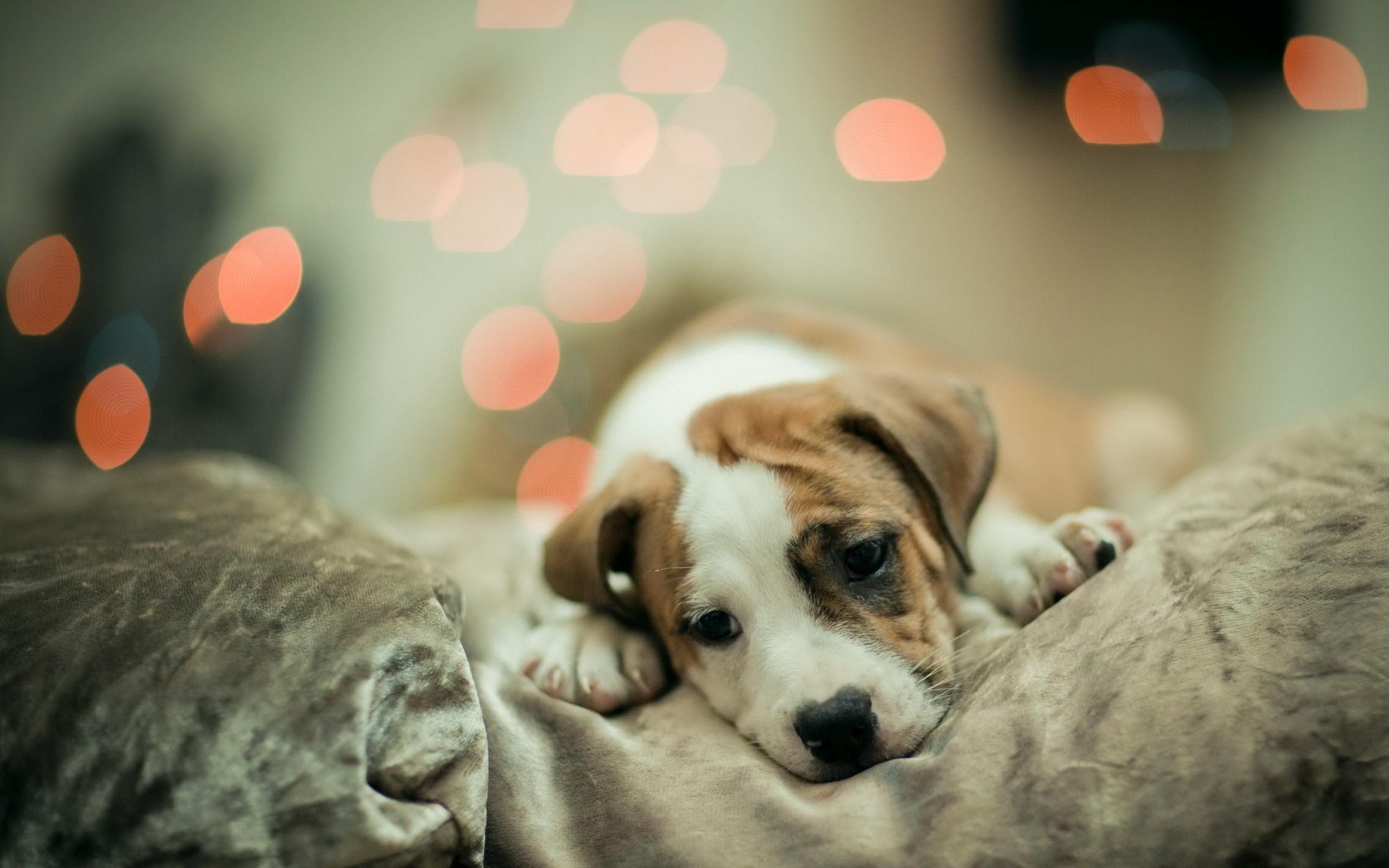 cute-dog-wallpaper-3