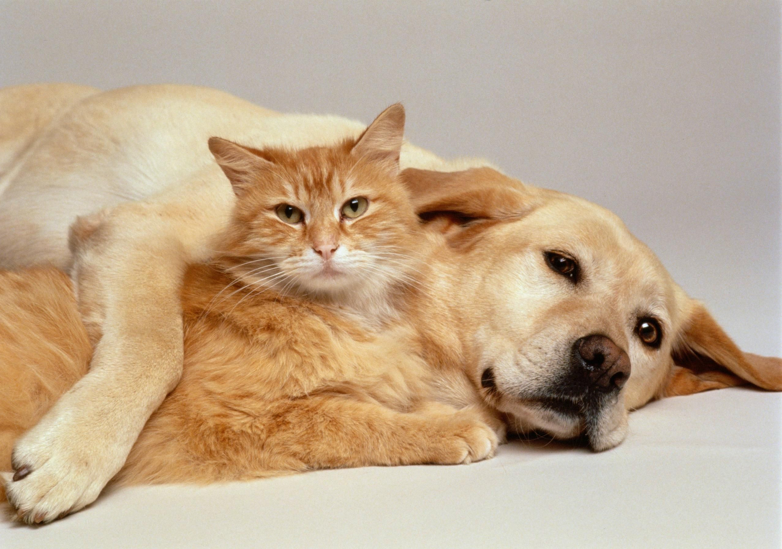 … Wallpaper Of Cute Cats And Dogs Cat And Dog Wallpapers – Wallpaper Cave