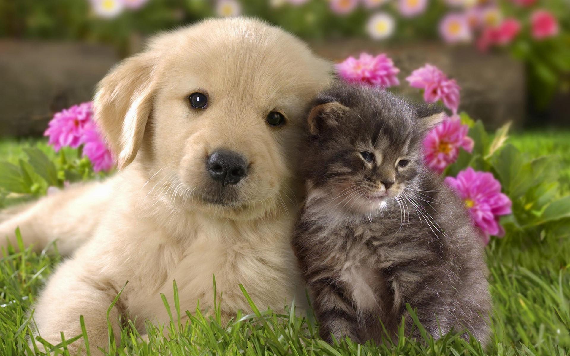 Cute-Dog-and-Cat-Wallpaper