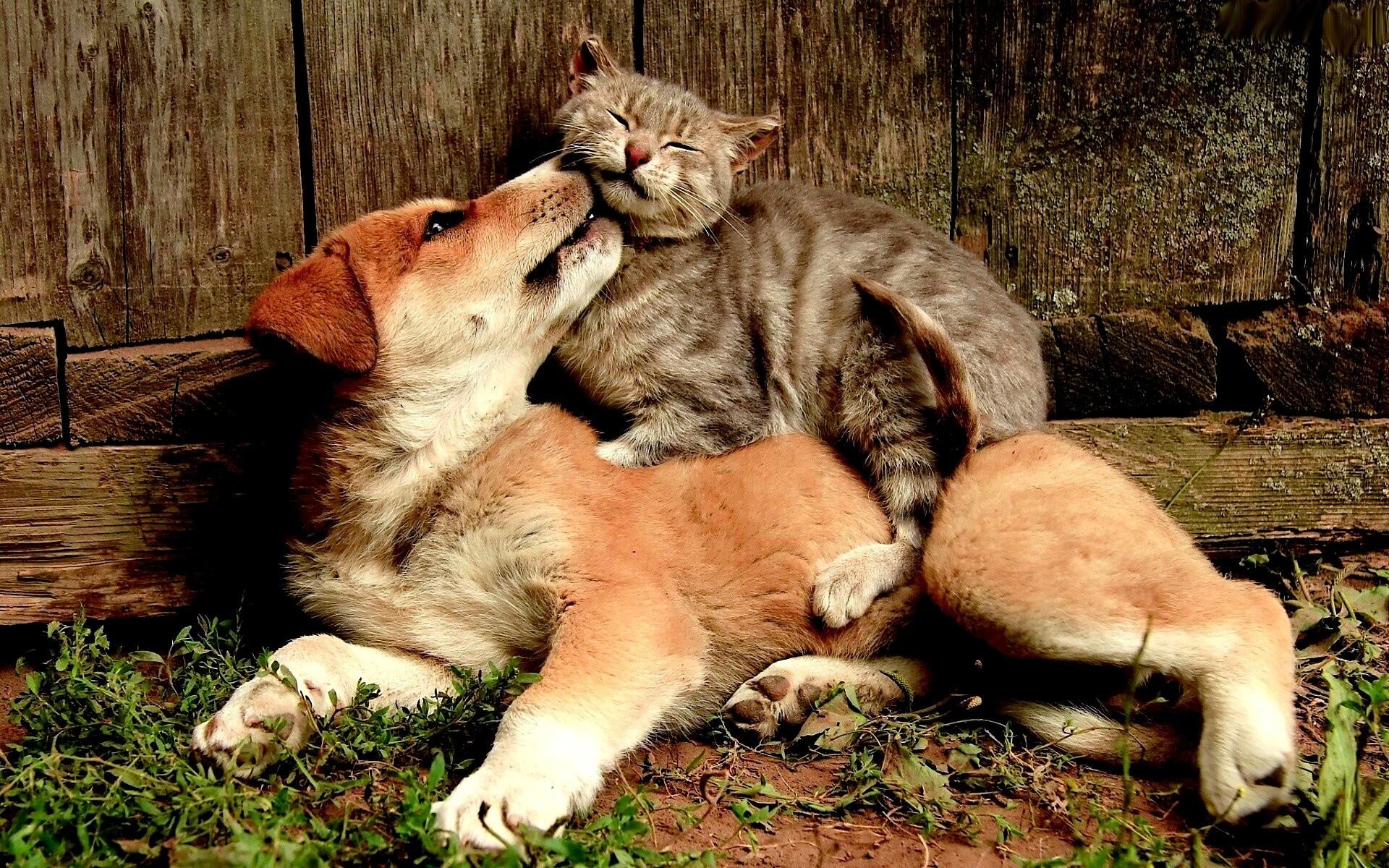 Friends animal cute cat dog wallpaper | | 817677 | WallpaperUP