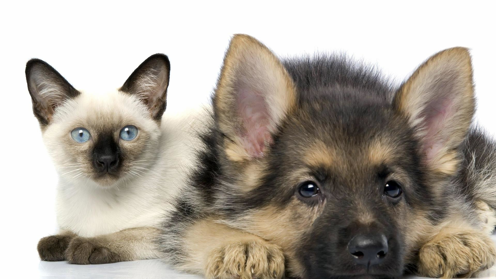 child-of-artemis: Cute Cats And Dogs Wallpaper