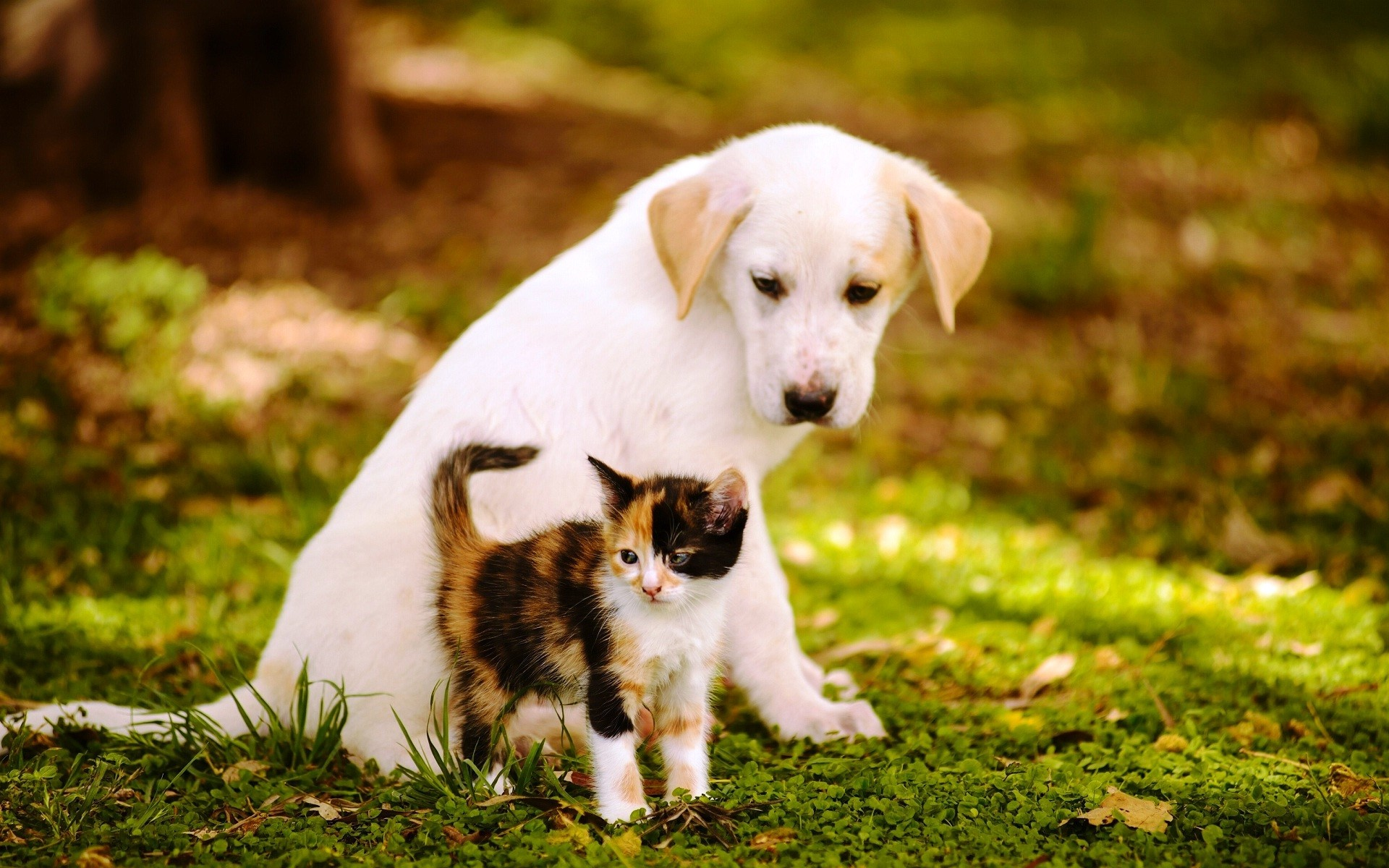 Cute baby dogs and cats – photo#6