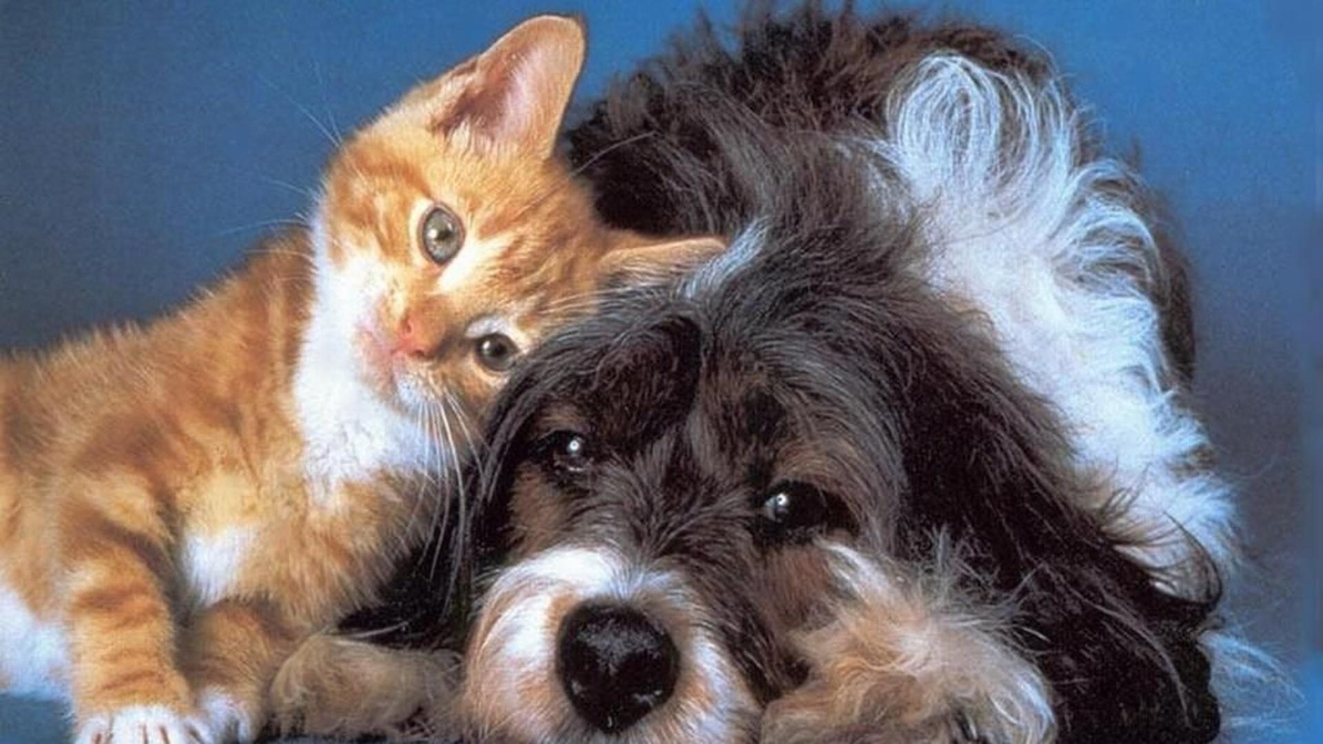 Cat & Dog Full HD Wallpaper