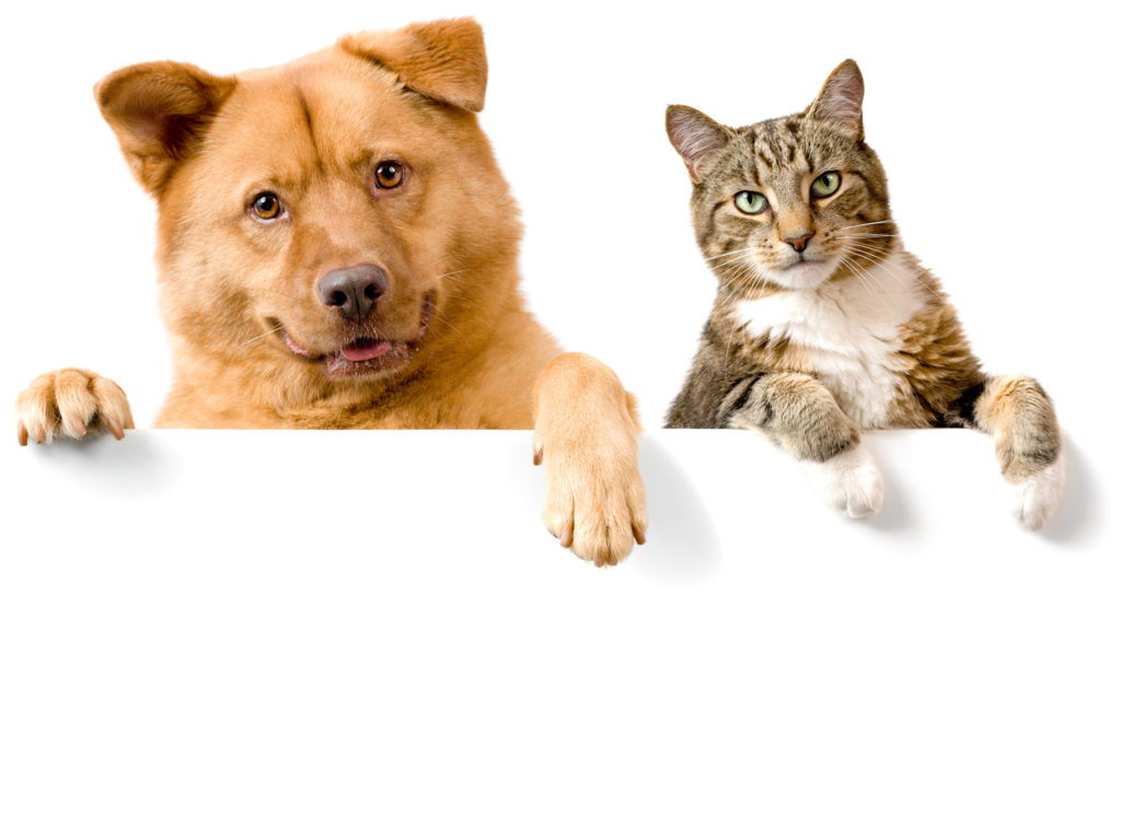 Dog And Cat Wallpaper Background …