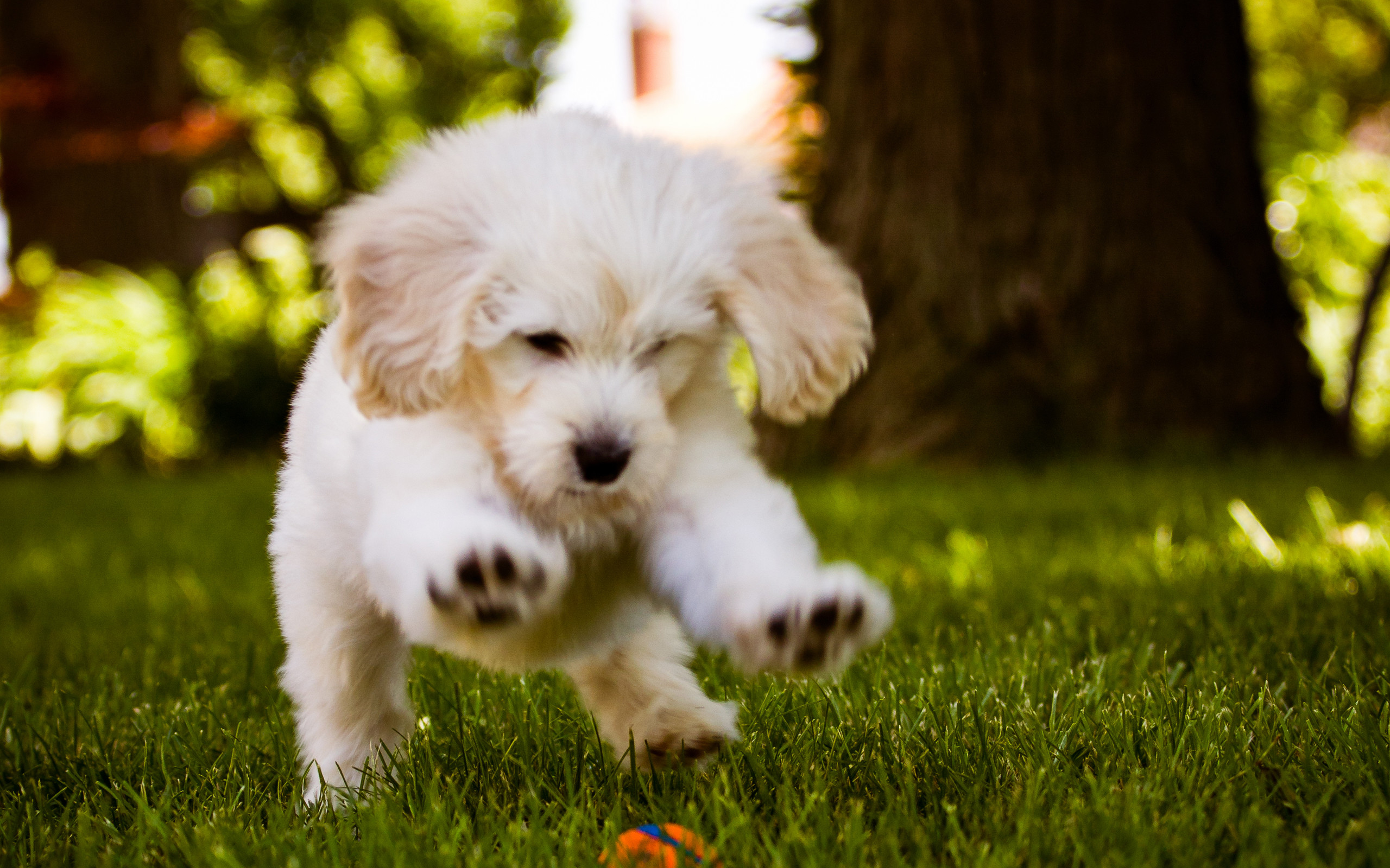 Little Dog Playing In The Wood Free HD Wallpaper Desktop Backgrounds .