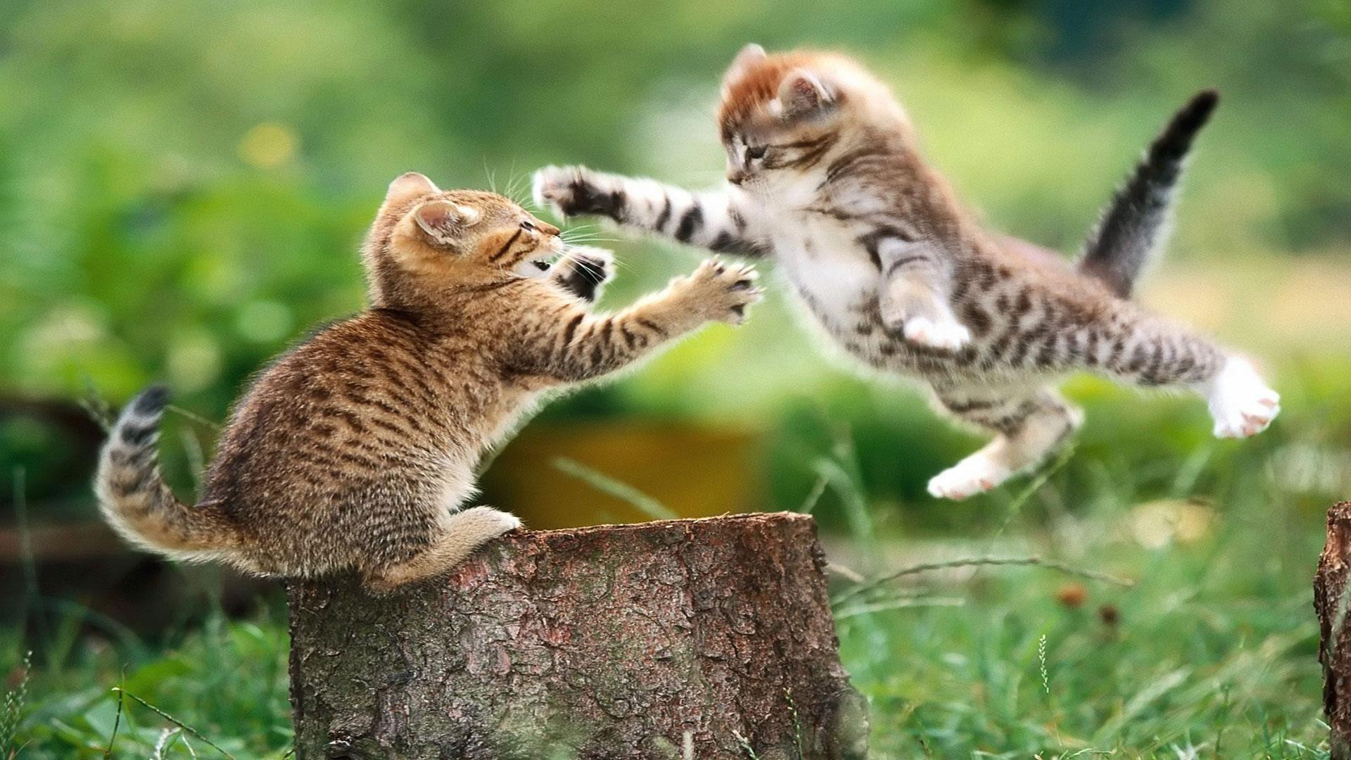 hd cute cat and dog pics wallpaper