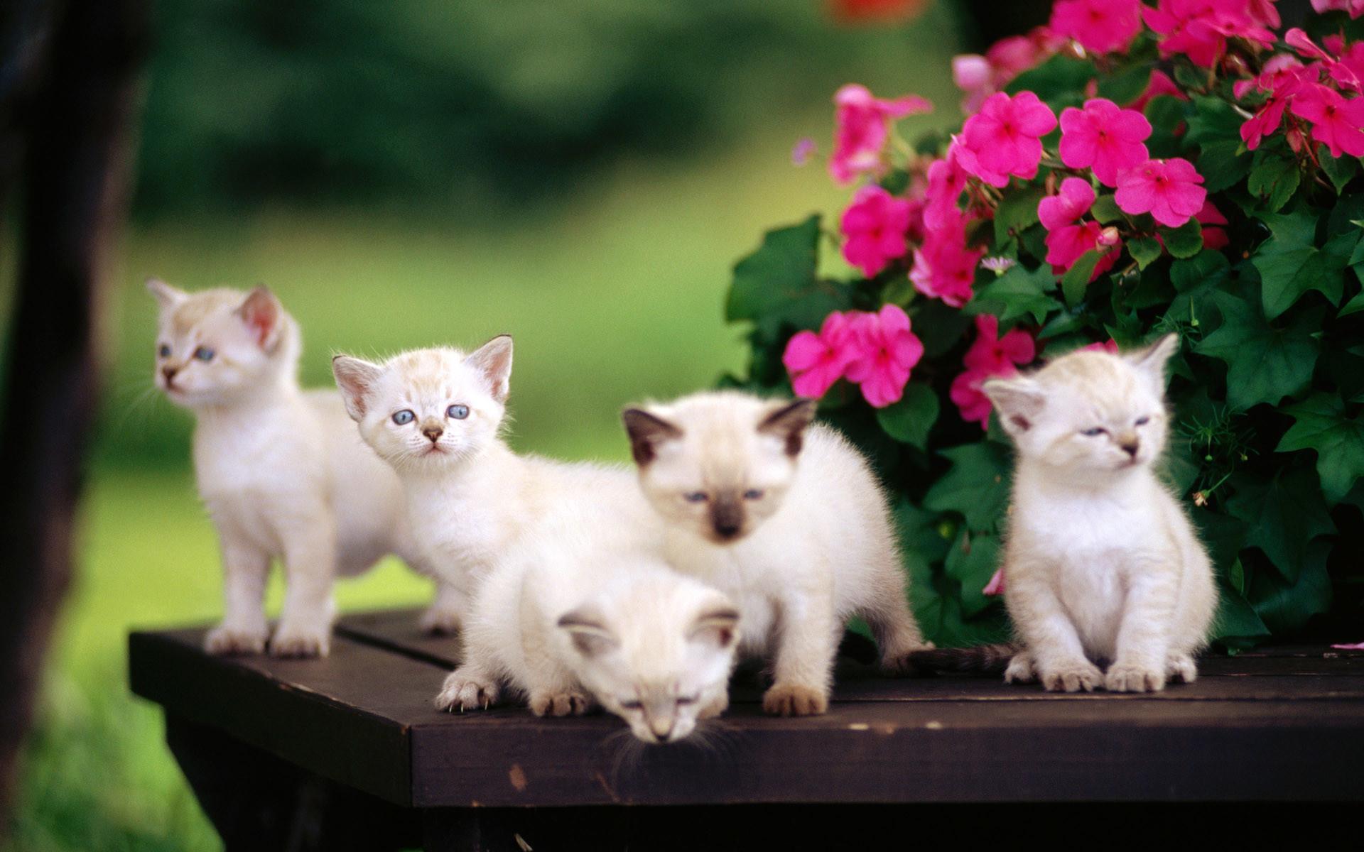baby cats pics cute