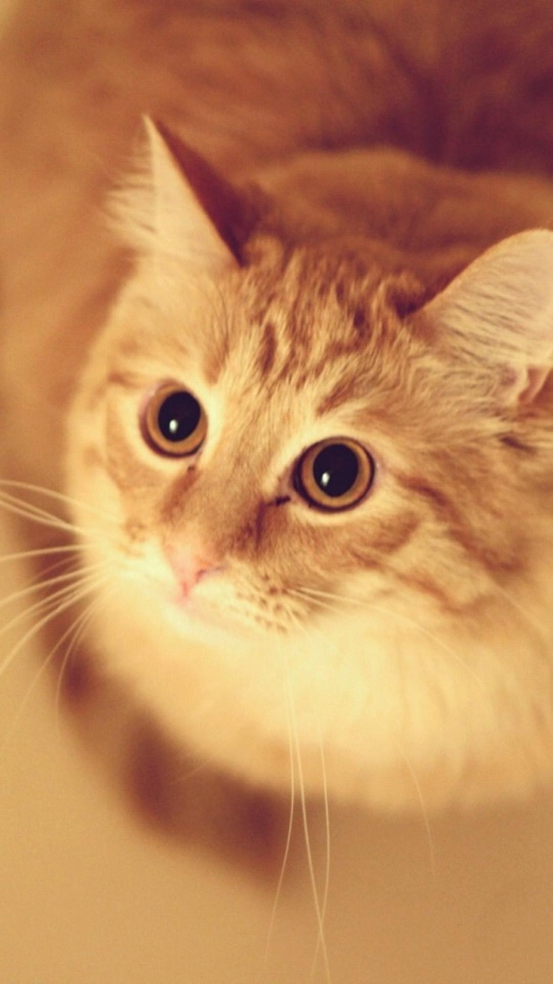 Cute Pet Kitten Cat Animal Blur iPhone 6 wallpaper