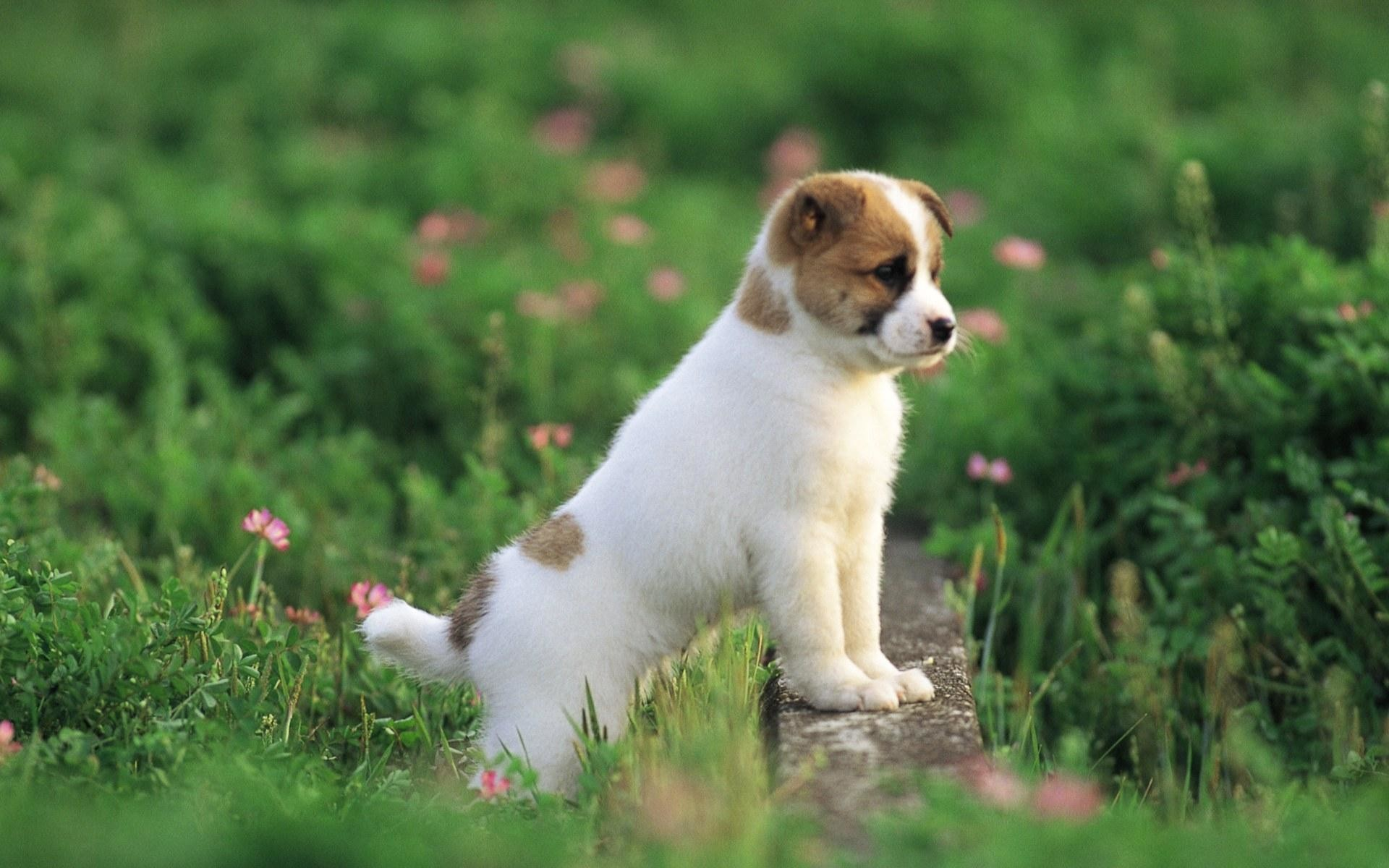 HD Wallpaper and background photos of Pretty Dog wallpaper for fans of  Puppies images.