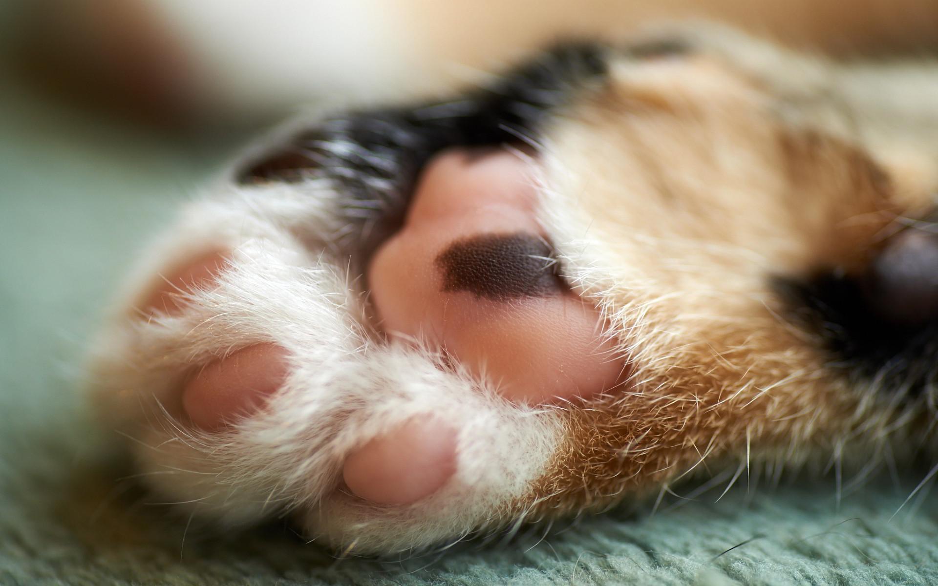Cute cat paw