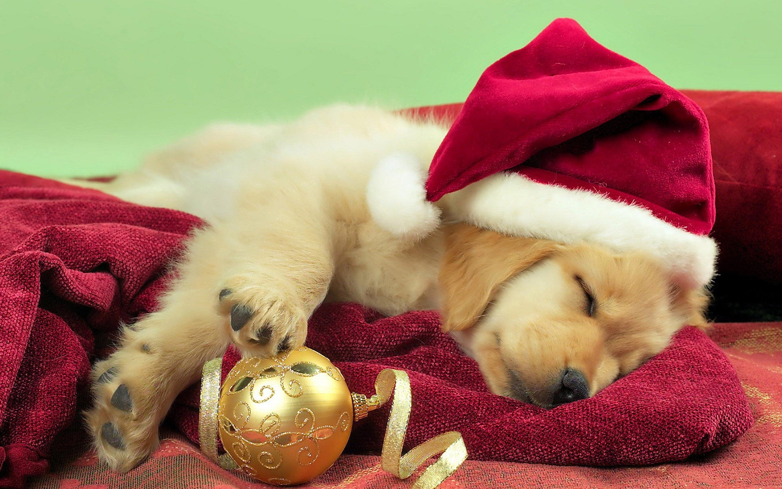 desktop hd christmas puppies wallpaper