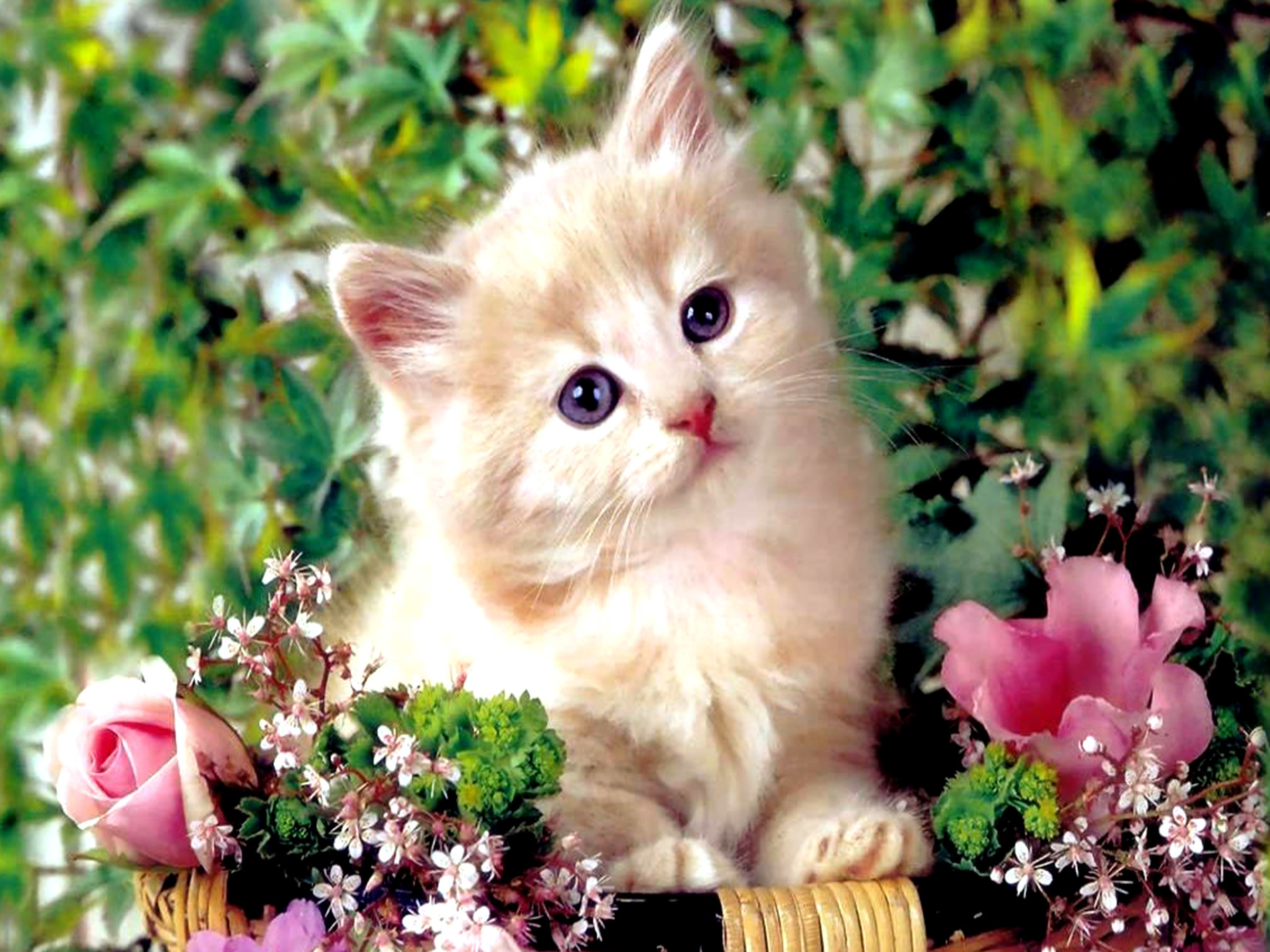 HD Wallpaper and background photos of baby kittens for fans of Baby Animals  images.
