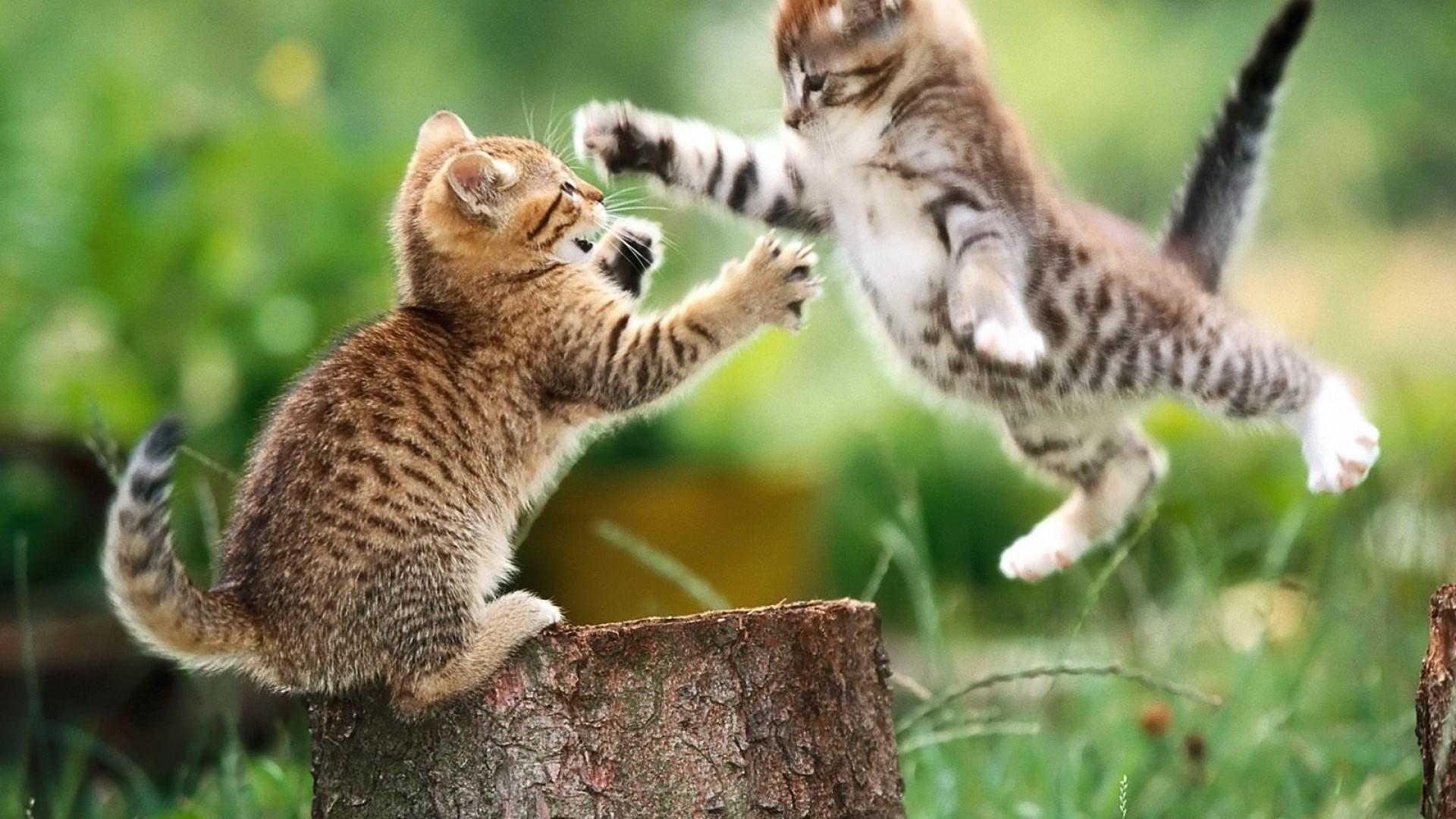 Kitty Play Wallpaper – Wallpapersafari intended for Kitty Play Wallpapers
