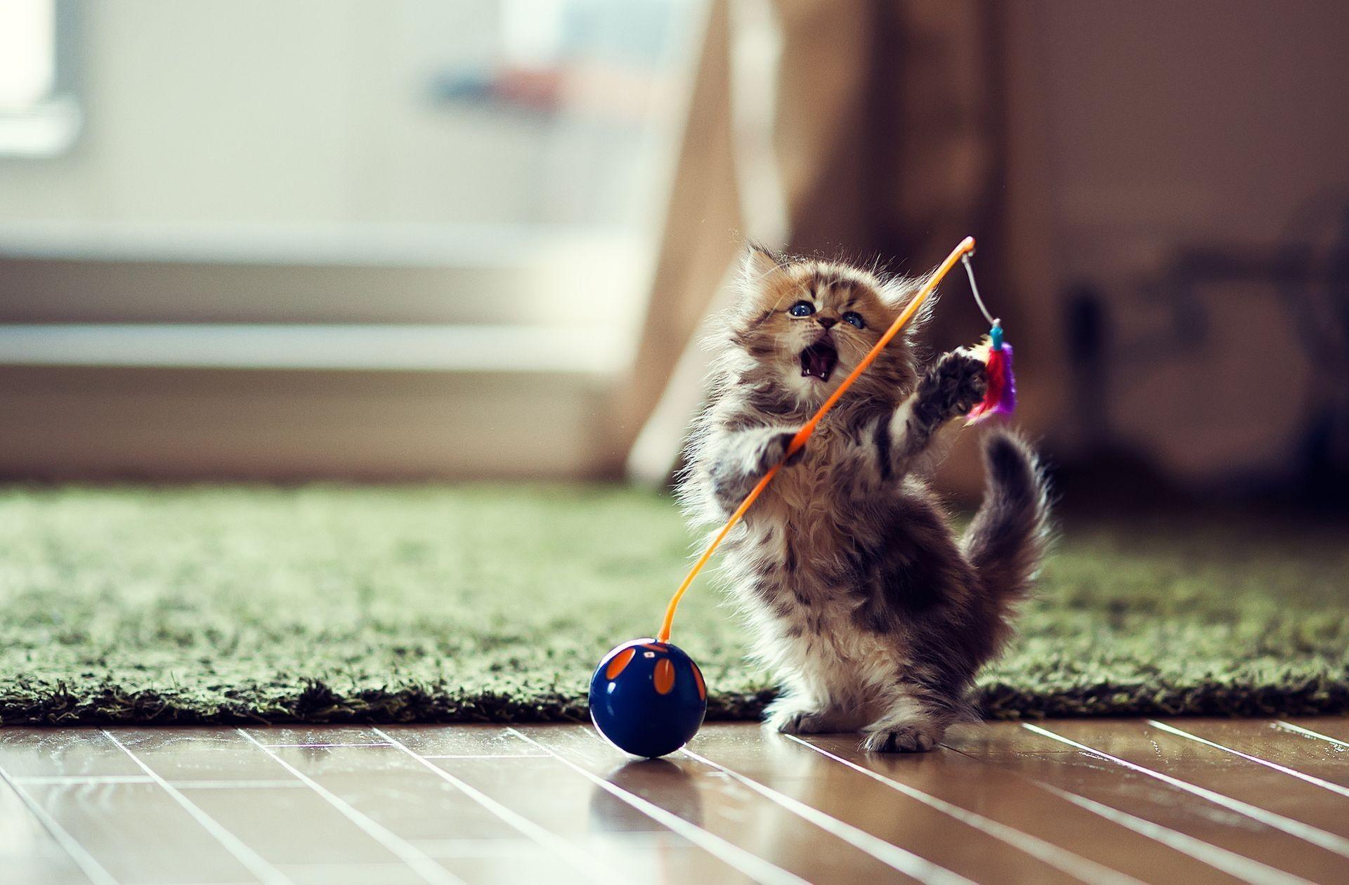play-cat-wallpaper-1