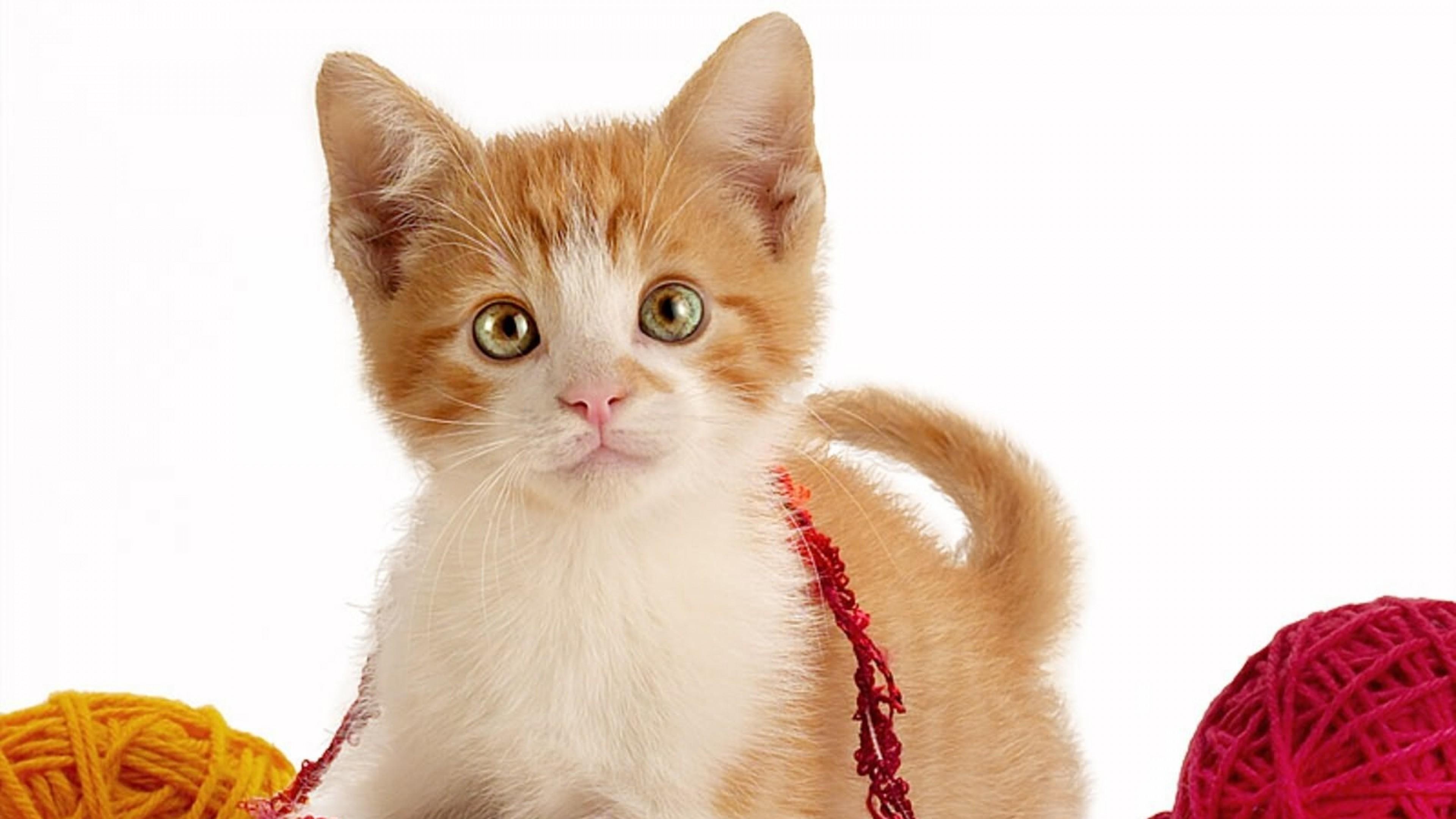 Wallpaper kitty, play, strings