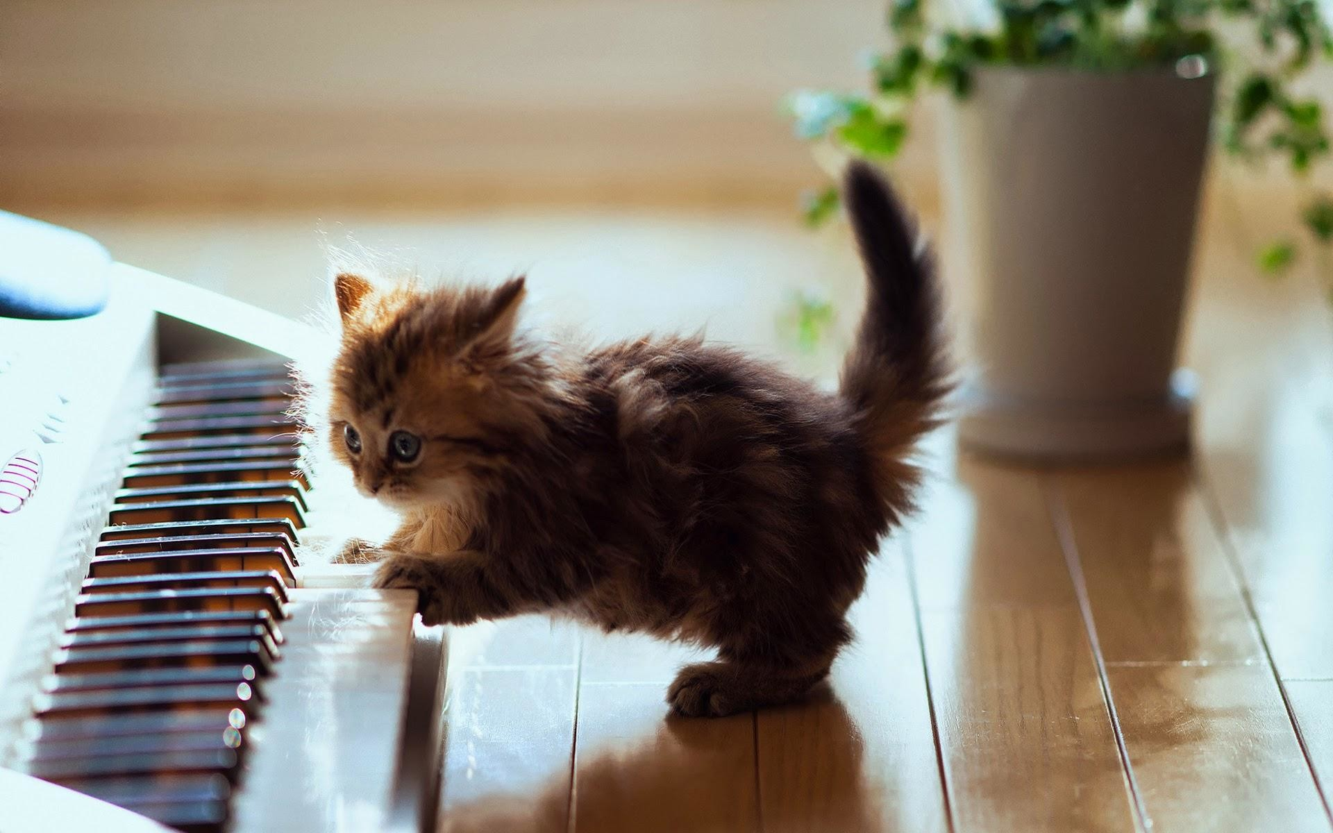 Kitten-playing-the-piano-wallpaper-wp2006707