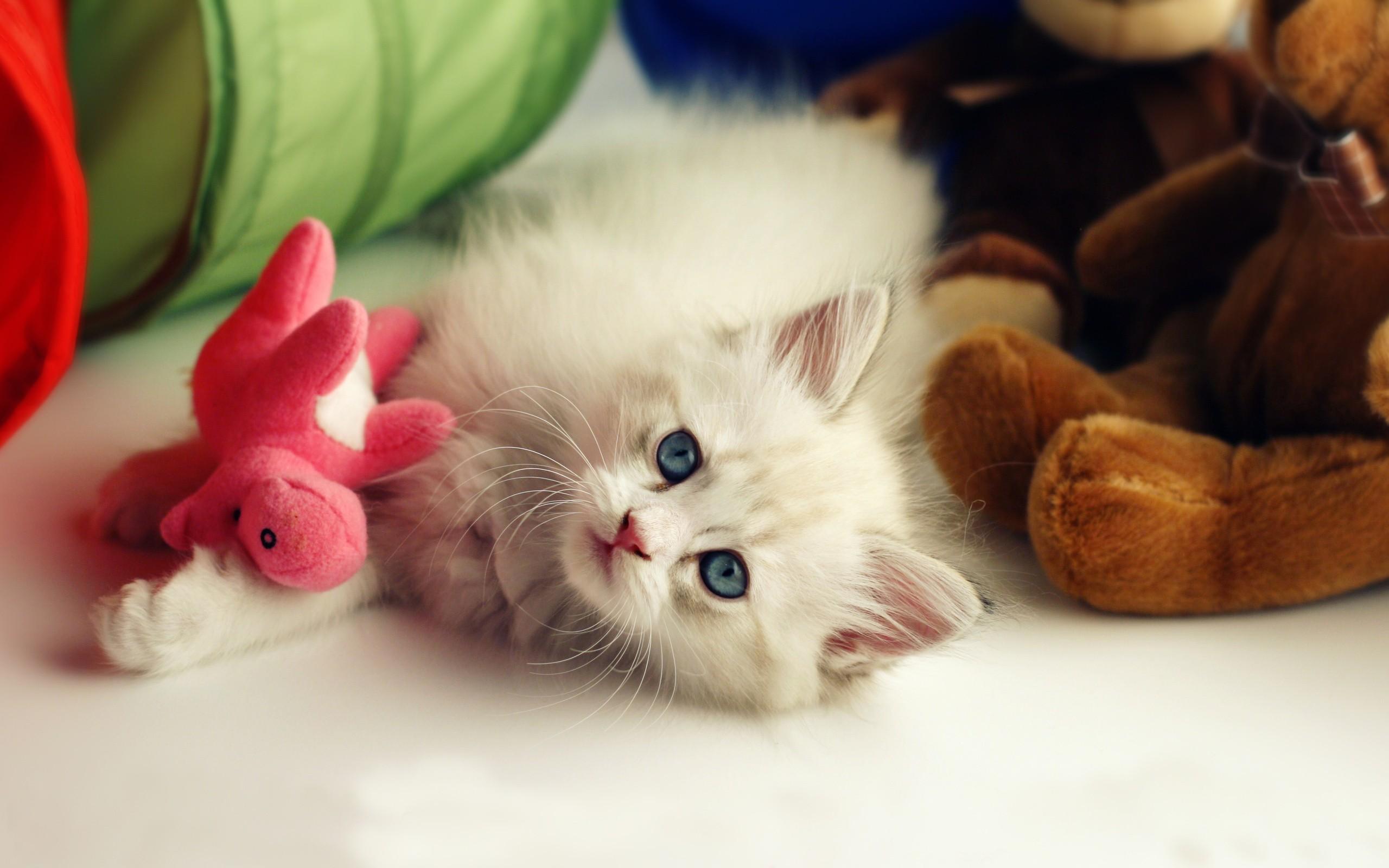 Lots Of Kittens Wallpaper – wallpaper. | Cute Kittens | Pinterest | Animal  wallpaper and Animal
