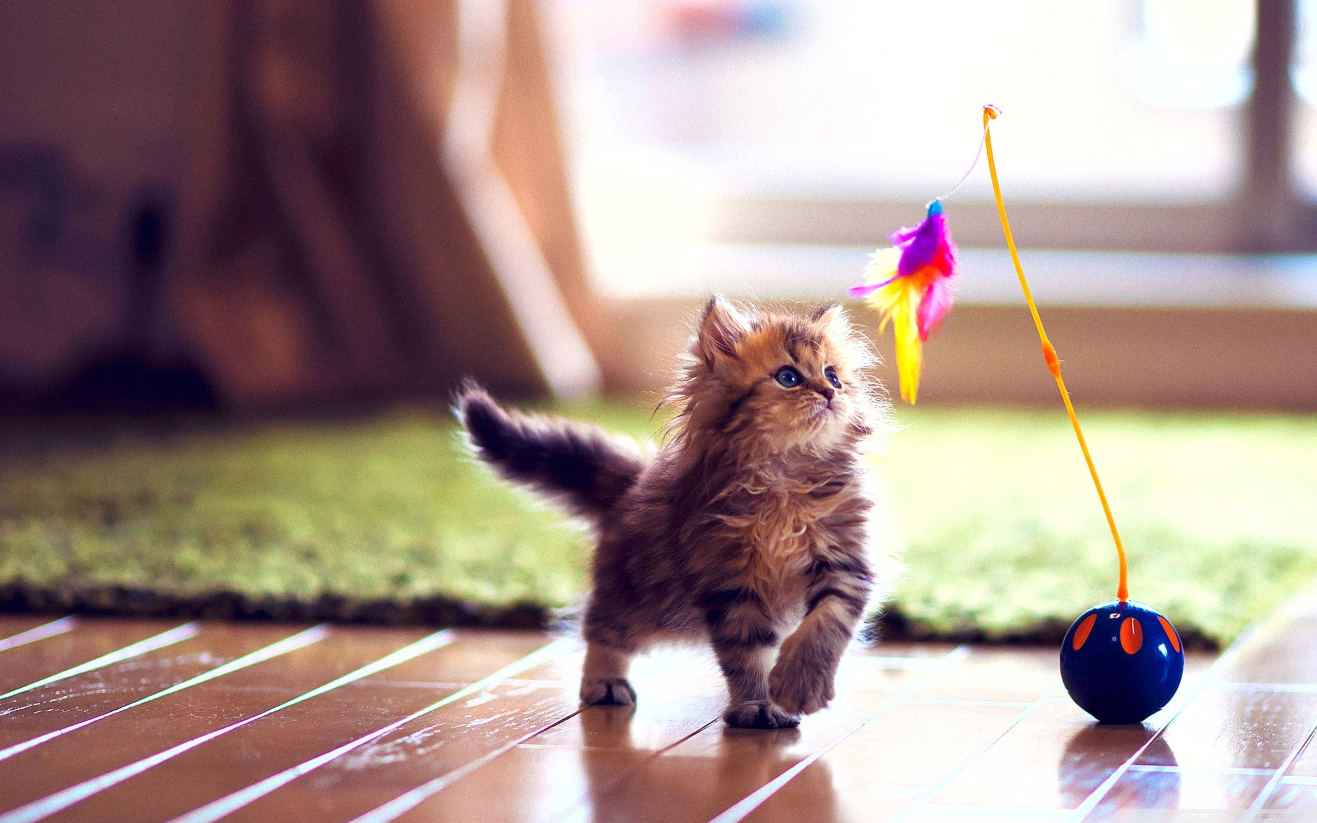 Very Cute Kitten Wallpaper Funny Cat Dog Pictures | HD Wallpapers |  Pinterest | Wallpaper and Wallpapers android