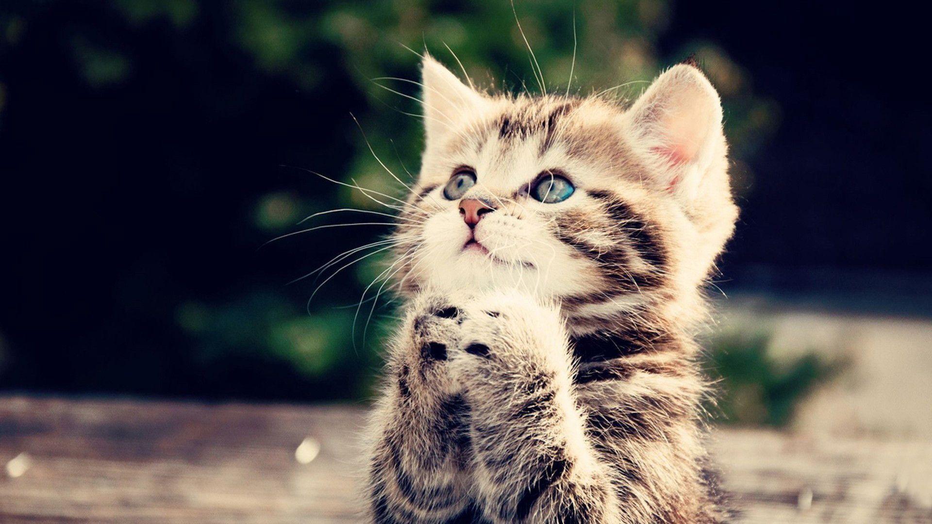Cute Kitten Wallpaper | Wallpaper Download