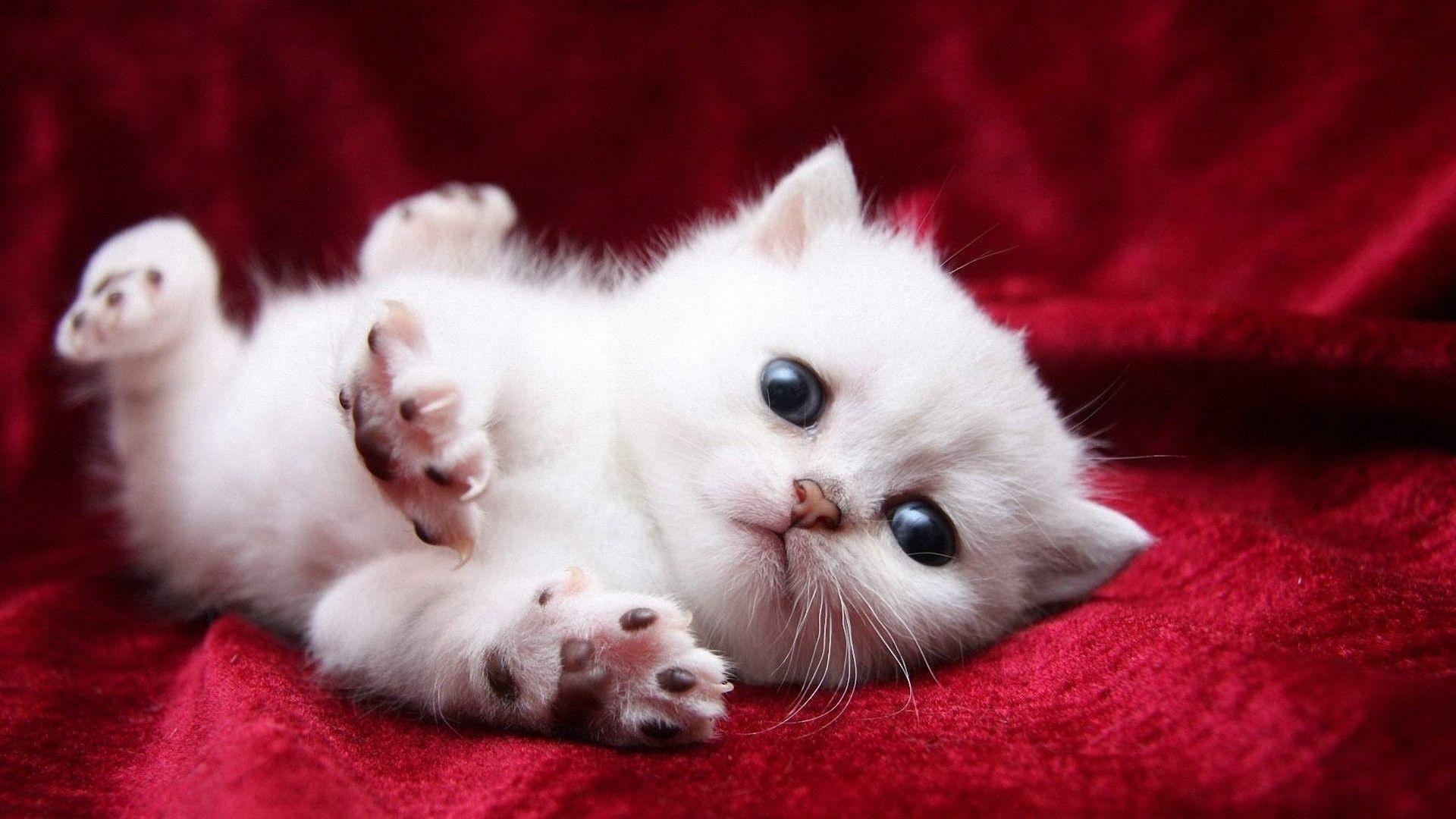 Wallpapers For > Baby Kitten Wallpaper