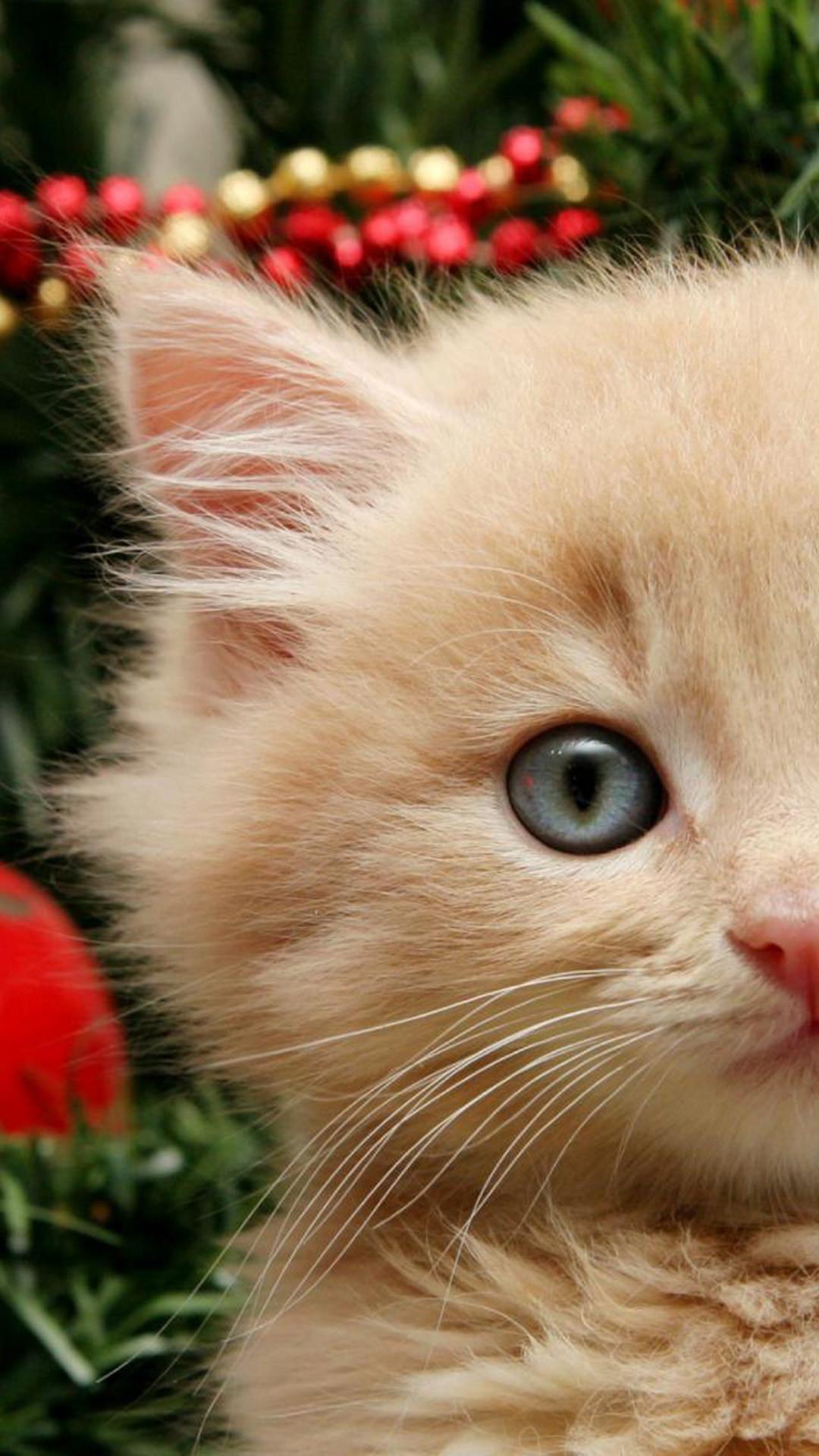 Funny Christmas Cat HD Wallpaper iPhone 7.