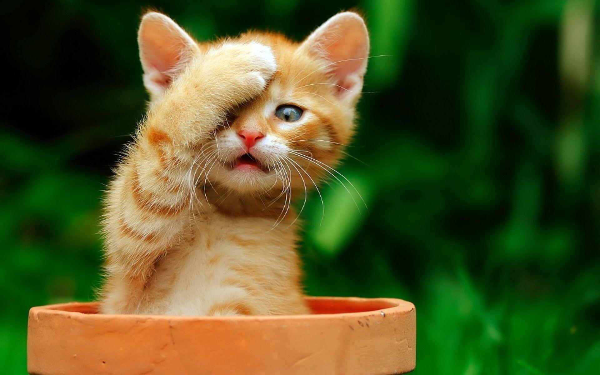 Surprised Kitten Wallpa…