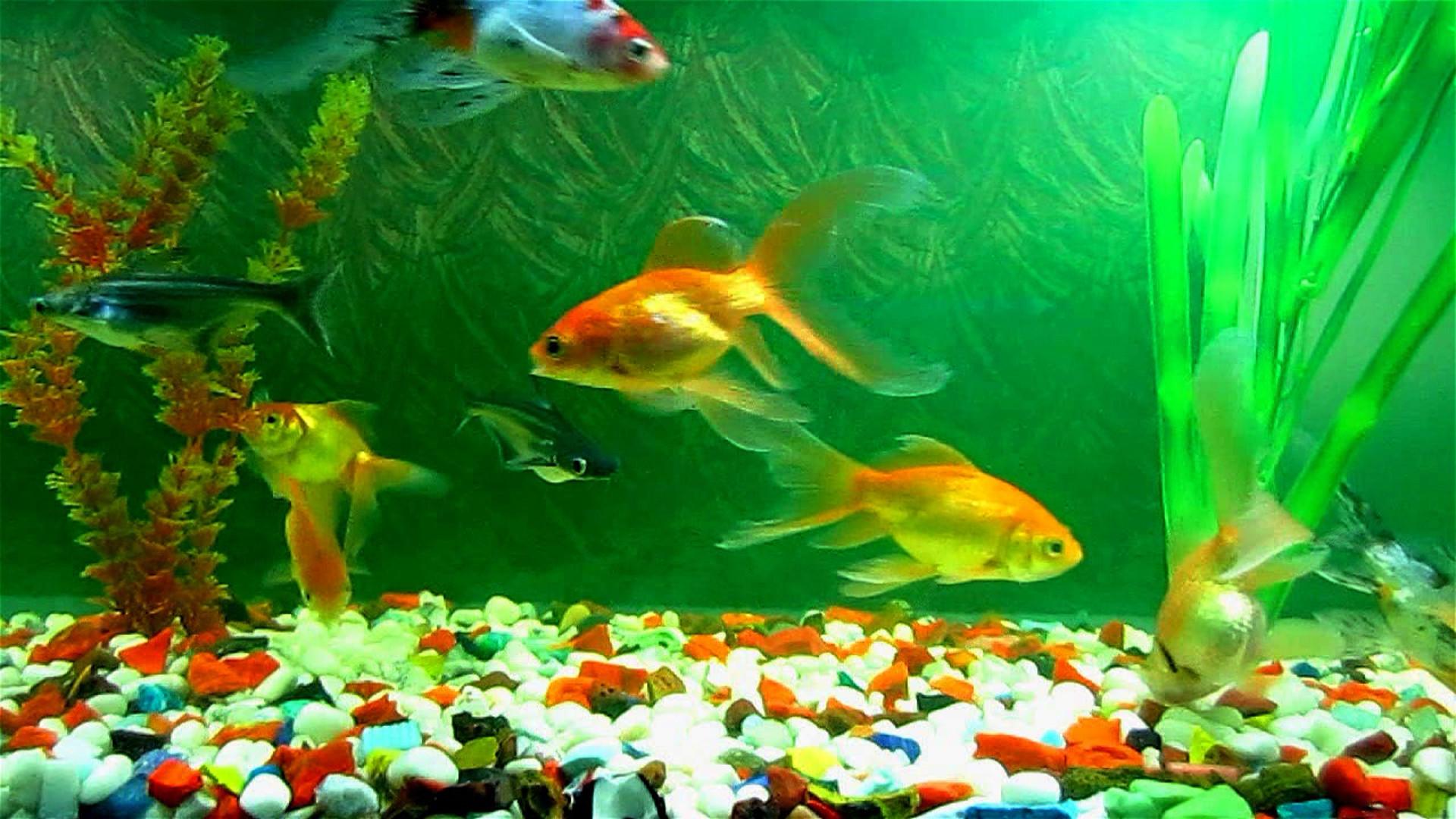 WinCustomize: Explore : Dream : Aquarium II