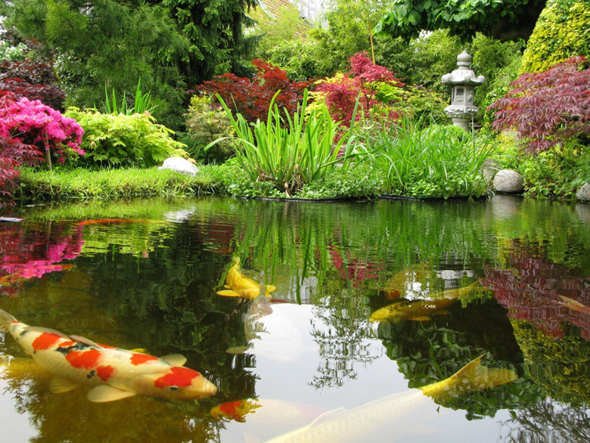 Residential Outdoor Koi Ponds – Long Island New York – Okeanos Aquascaping