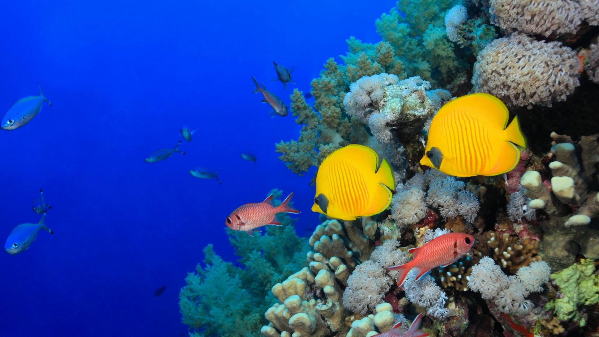 Corals Tag – Fish Corals World Animals Underwater Tank Full Hd for HD 16:9