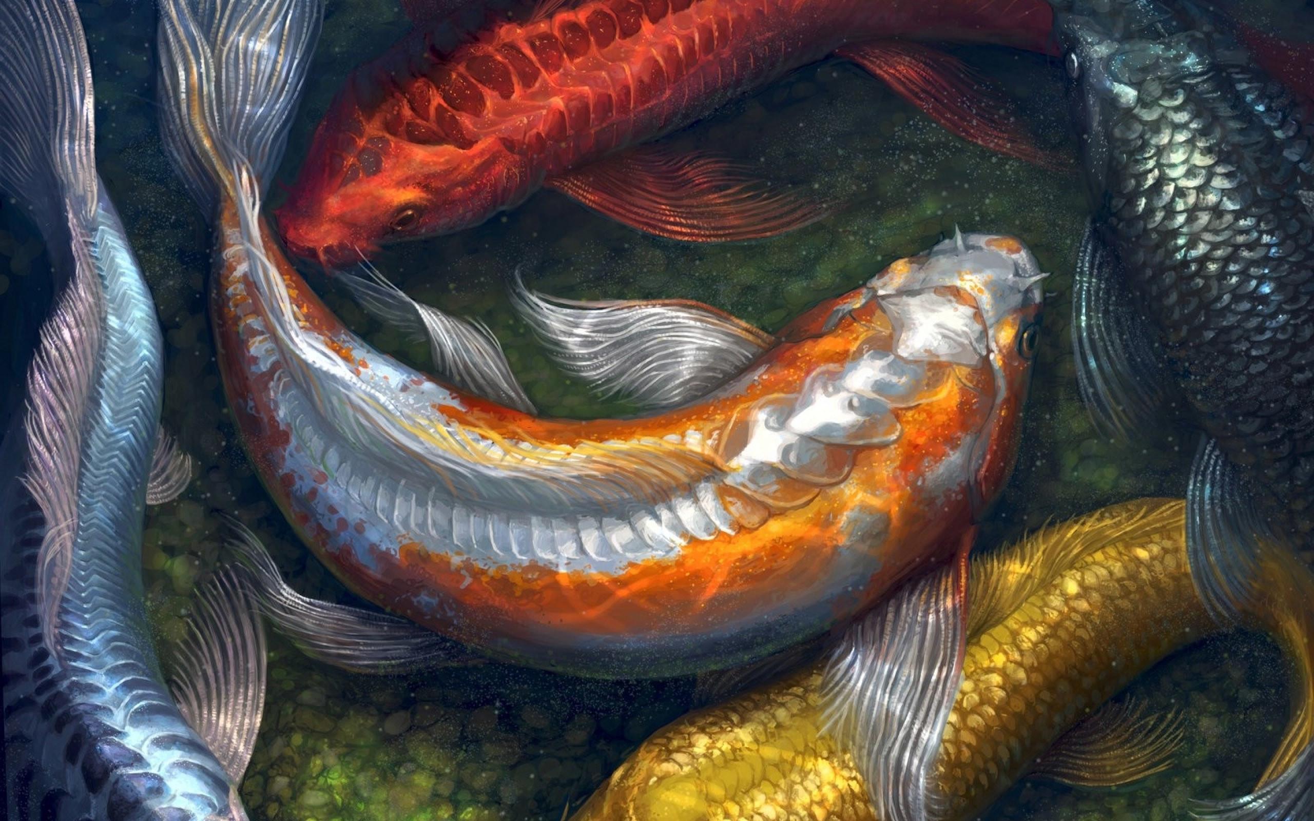 … koi fish wallpaper 31302 …