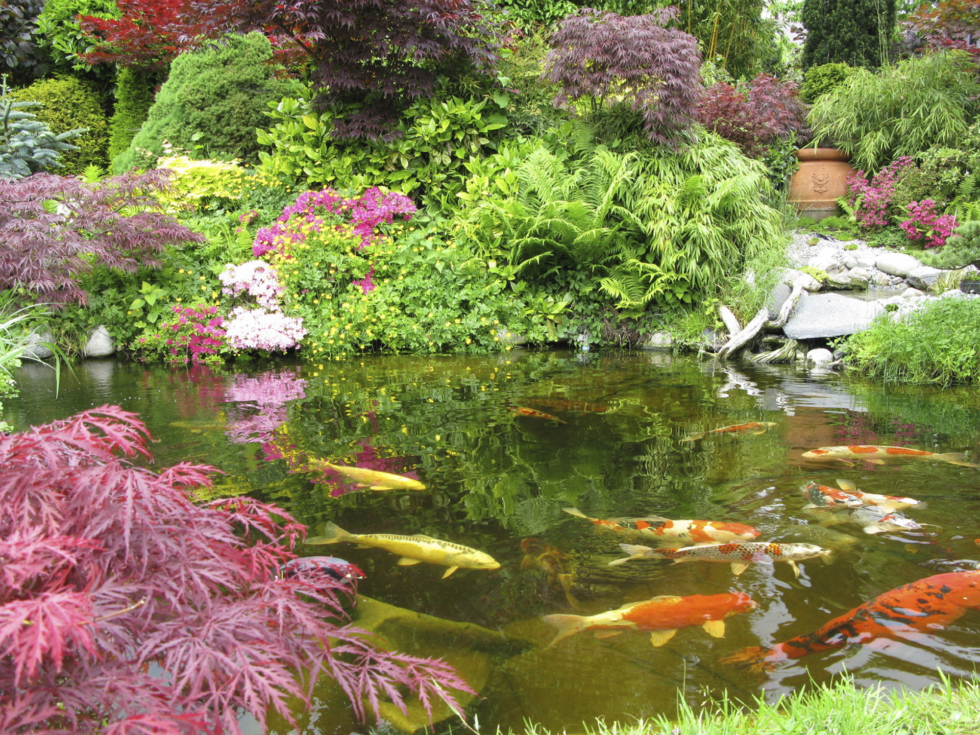 Japanese Koi Ponds with Unique Waterfall Designs NY & NJ