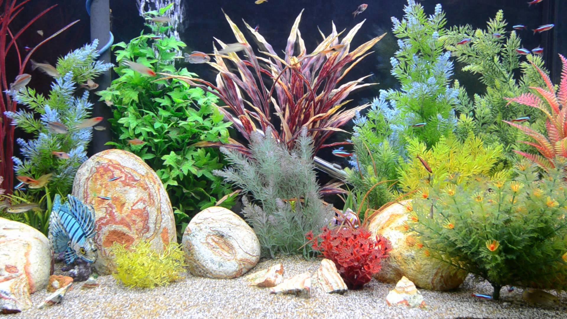 Aquarium Screensaver Free Download For Android : Free download aquarium  wallpapers pixelstalk.net