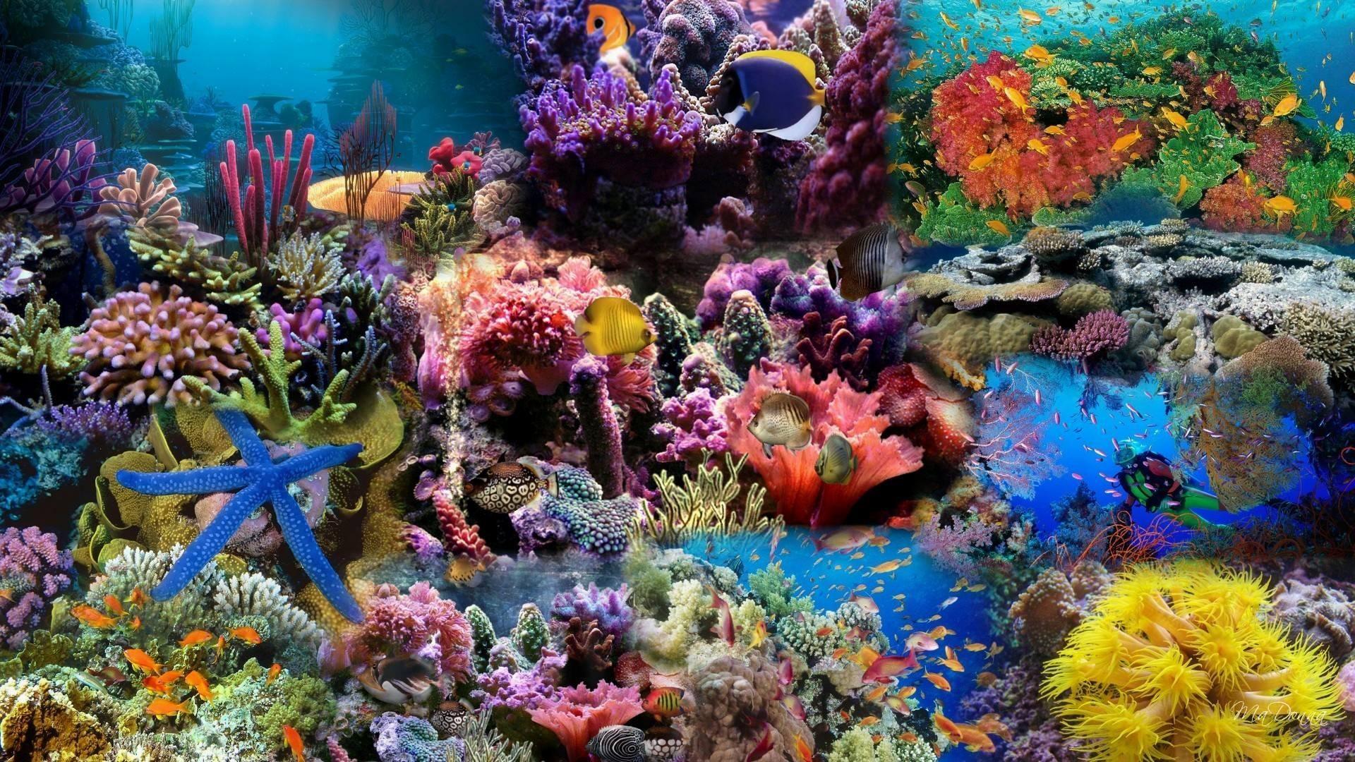 Aquarium Live Wallpaper Free Download For Laptop : Fish live wallpaper free  hdwallpaper20.com
