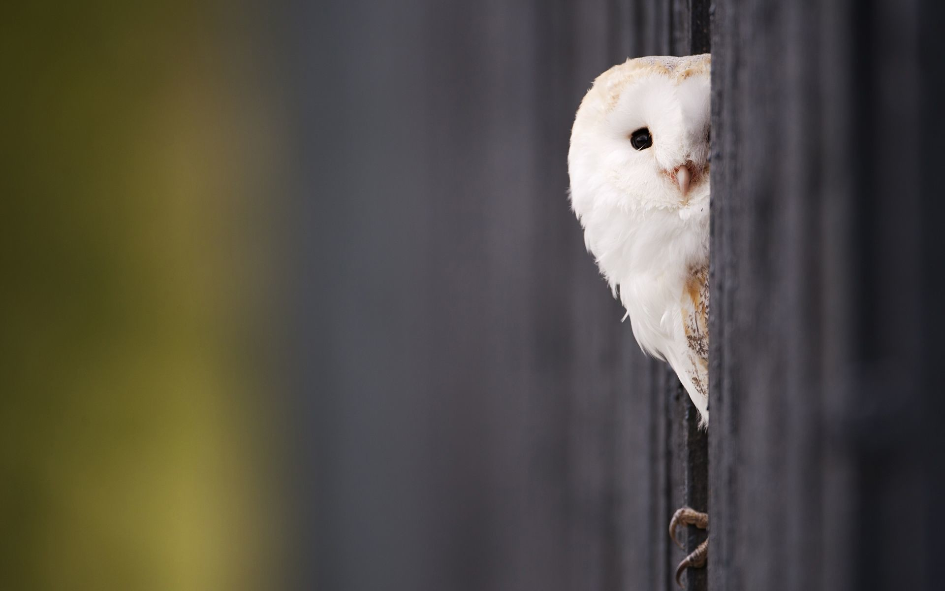 Fonds décran noir Owl i