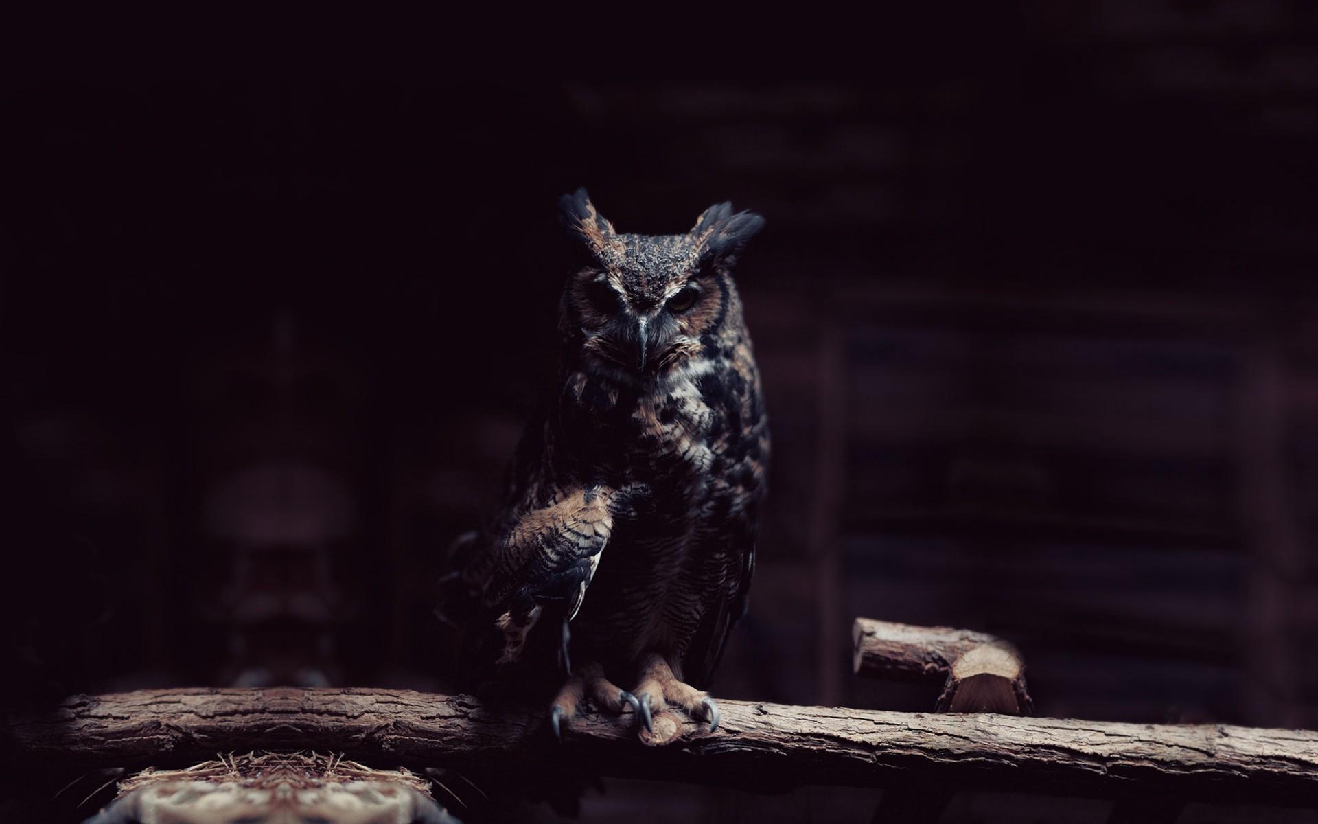hd owl wallpaper. Â«Â«