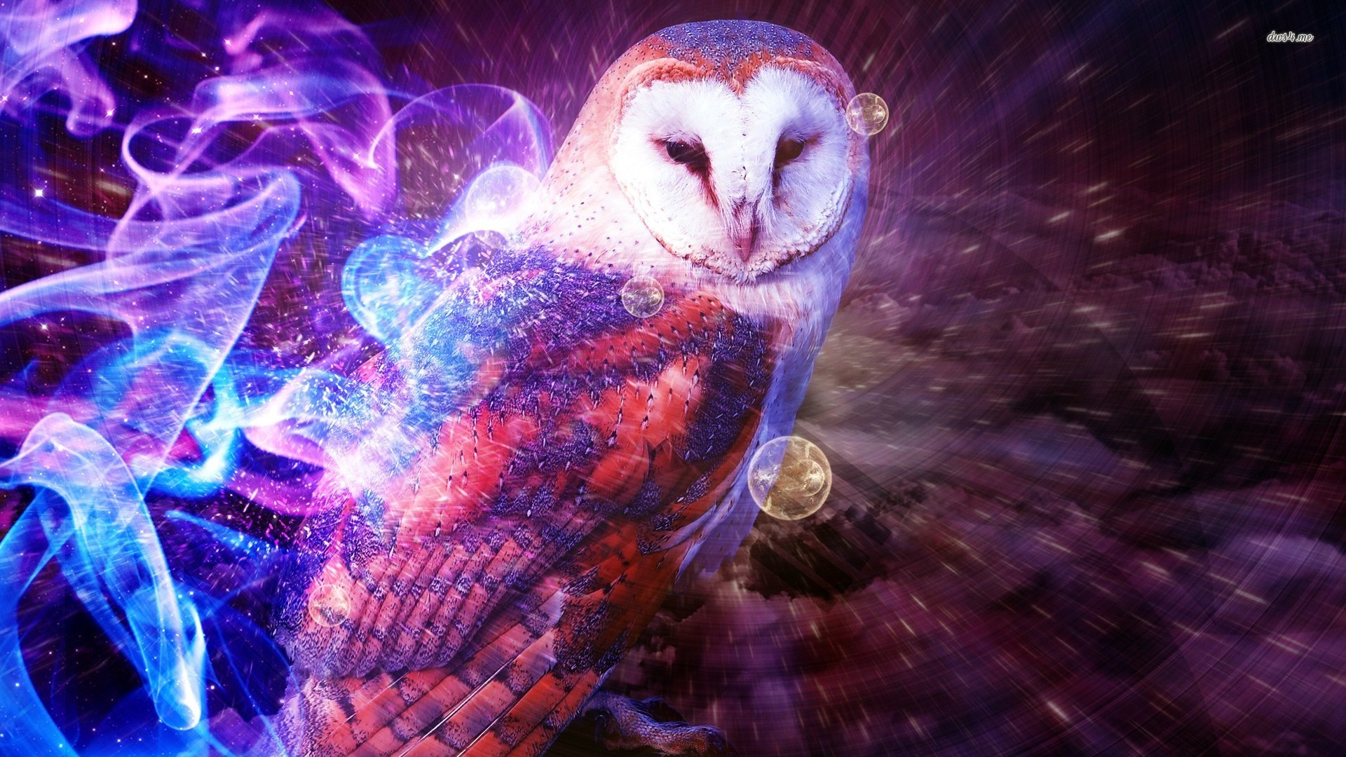 Owl wallpaper – Digital Art wallpapers – #8713