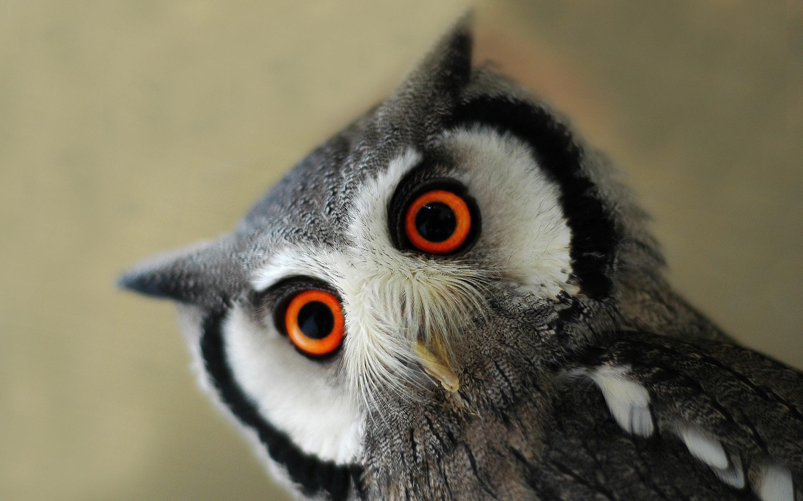 Pinterest   Cute Owls Wallpaper …   Download Wallpaper   Pinterest   Owl  wallpaper and Wallpaper