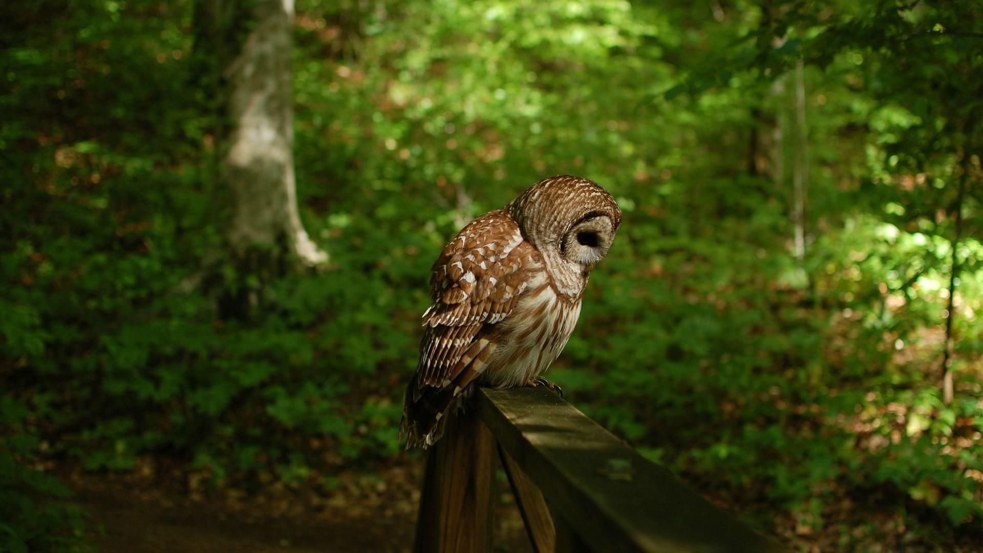 owl wallpaper A8. Â«Â«