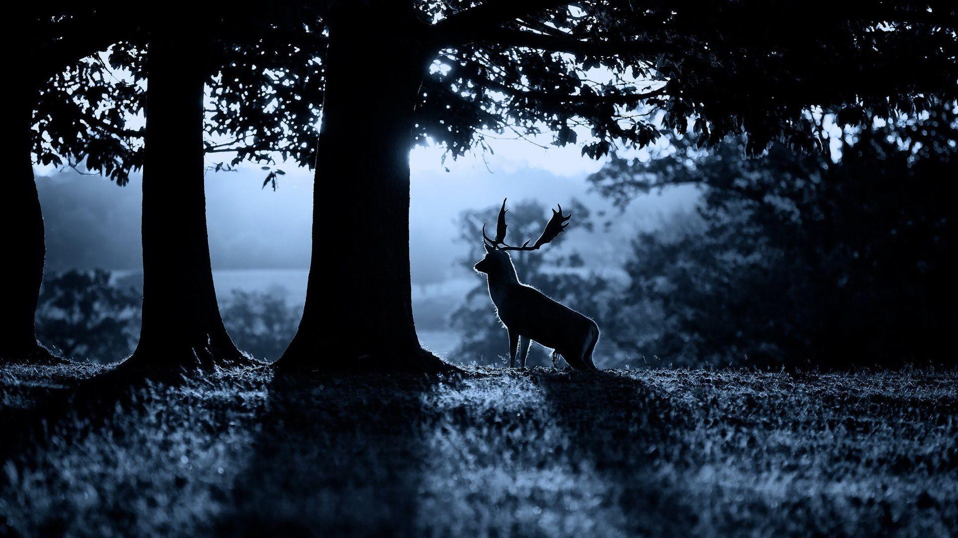 Download Free Deer Wallpaper Px High Resolution xPX Deer