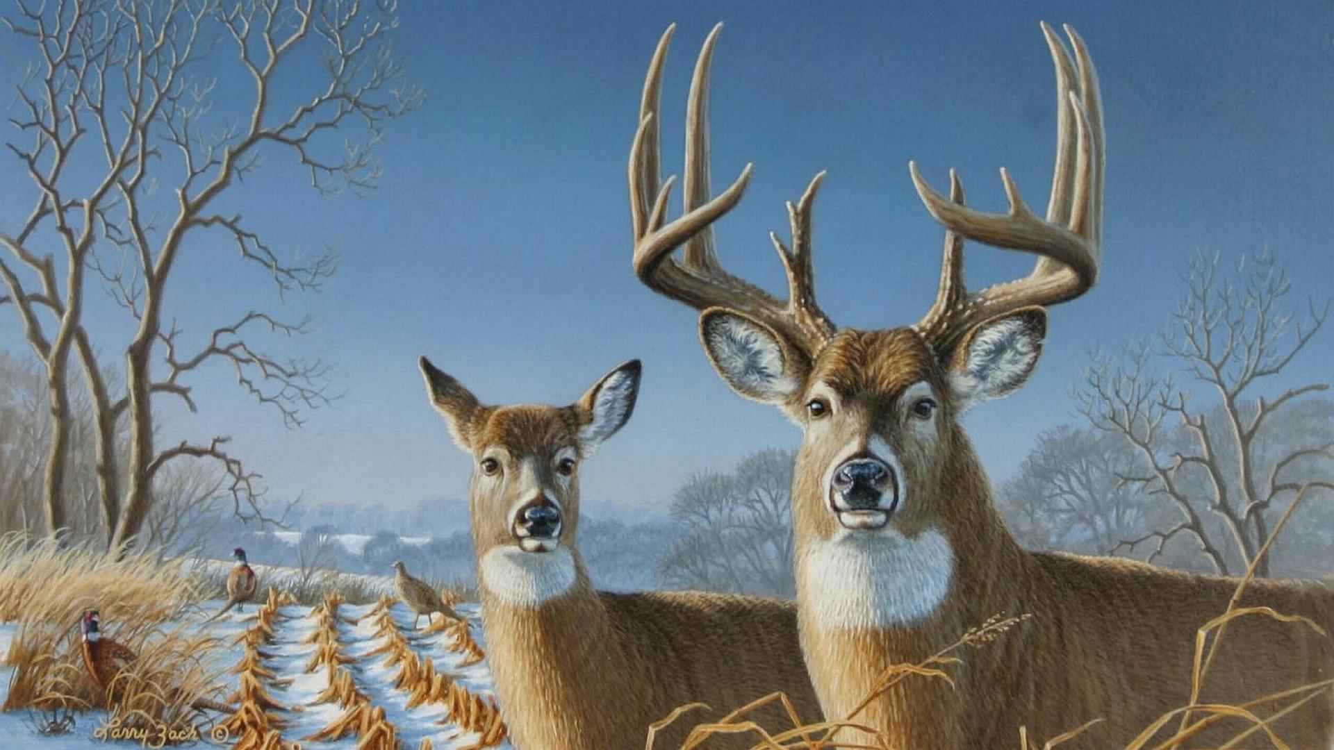 Whitetail Deer Wallpaper Whitetail Deer Backgrounds for PC HD | HD  Wallpapers | Pinterest | Wallpaper and Wallpaper art
