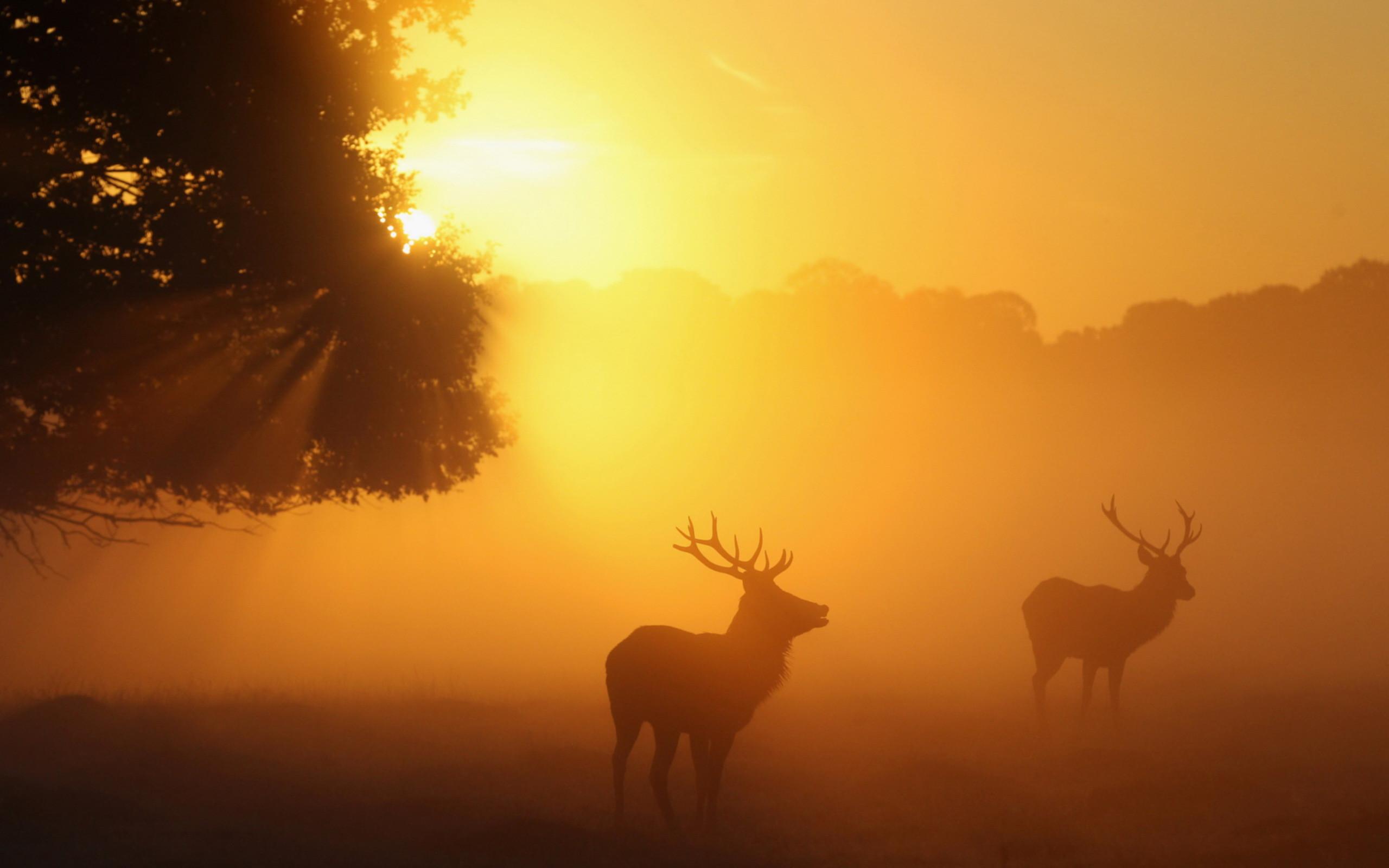 deer wallpaper hd. Â«Â«